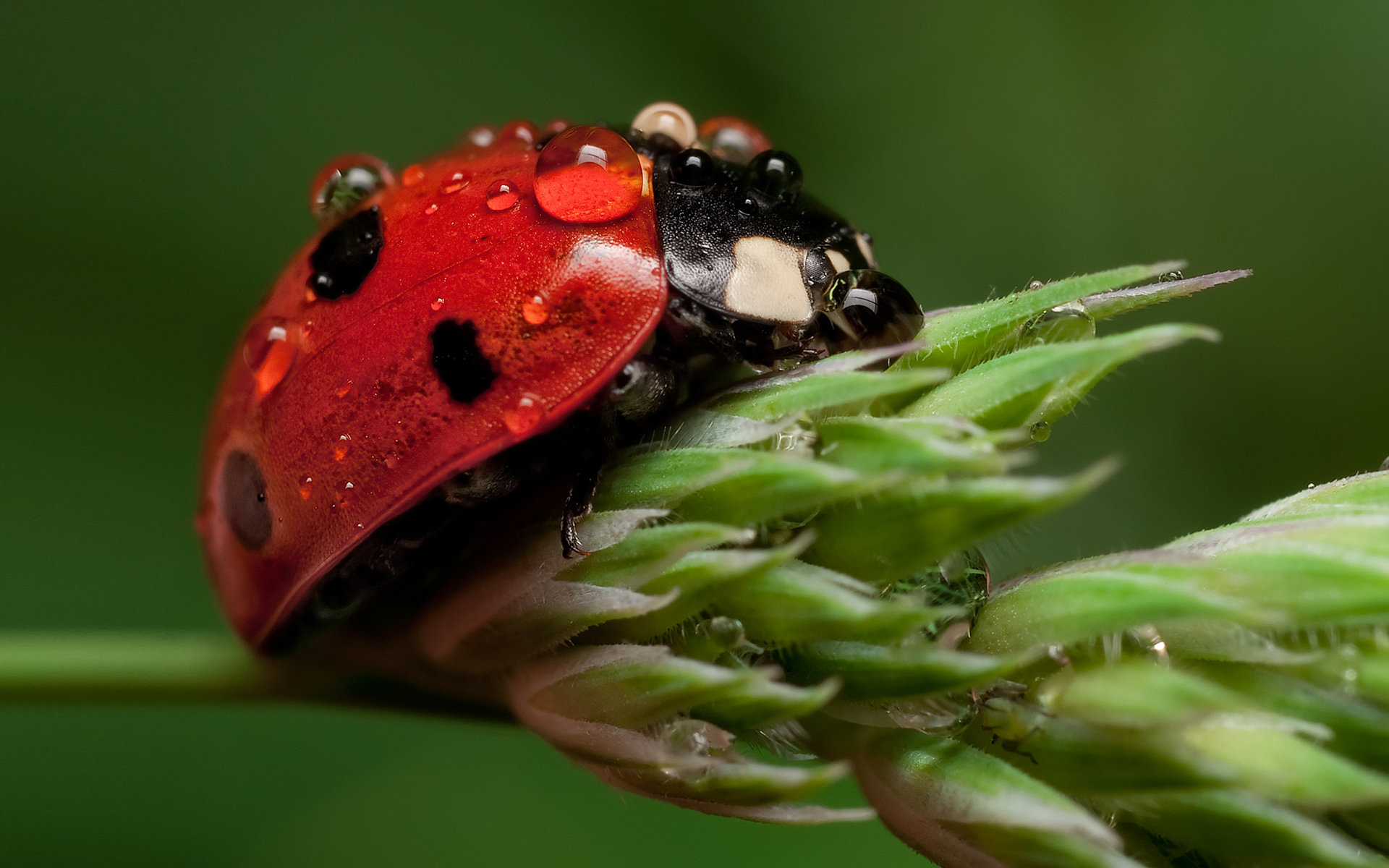 Awesome Ladybug free wallpaper ID:270331 for hd 1920x1200 PC