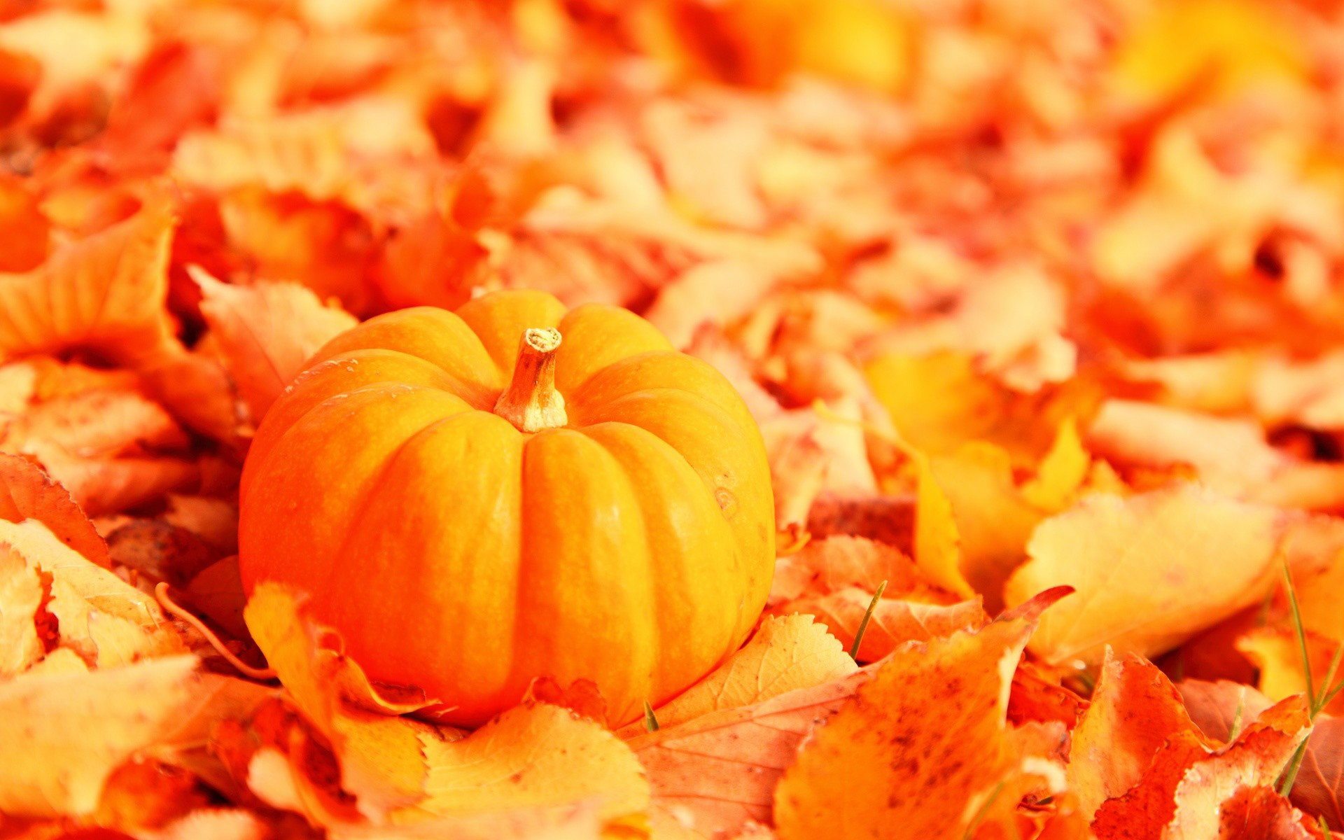 High resolution Pumpkin hd 1920x1200 background ID:194477 for PC