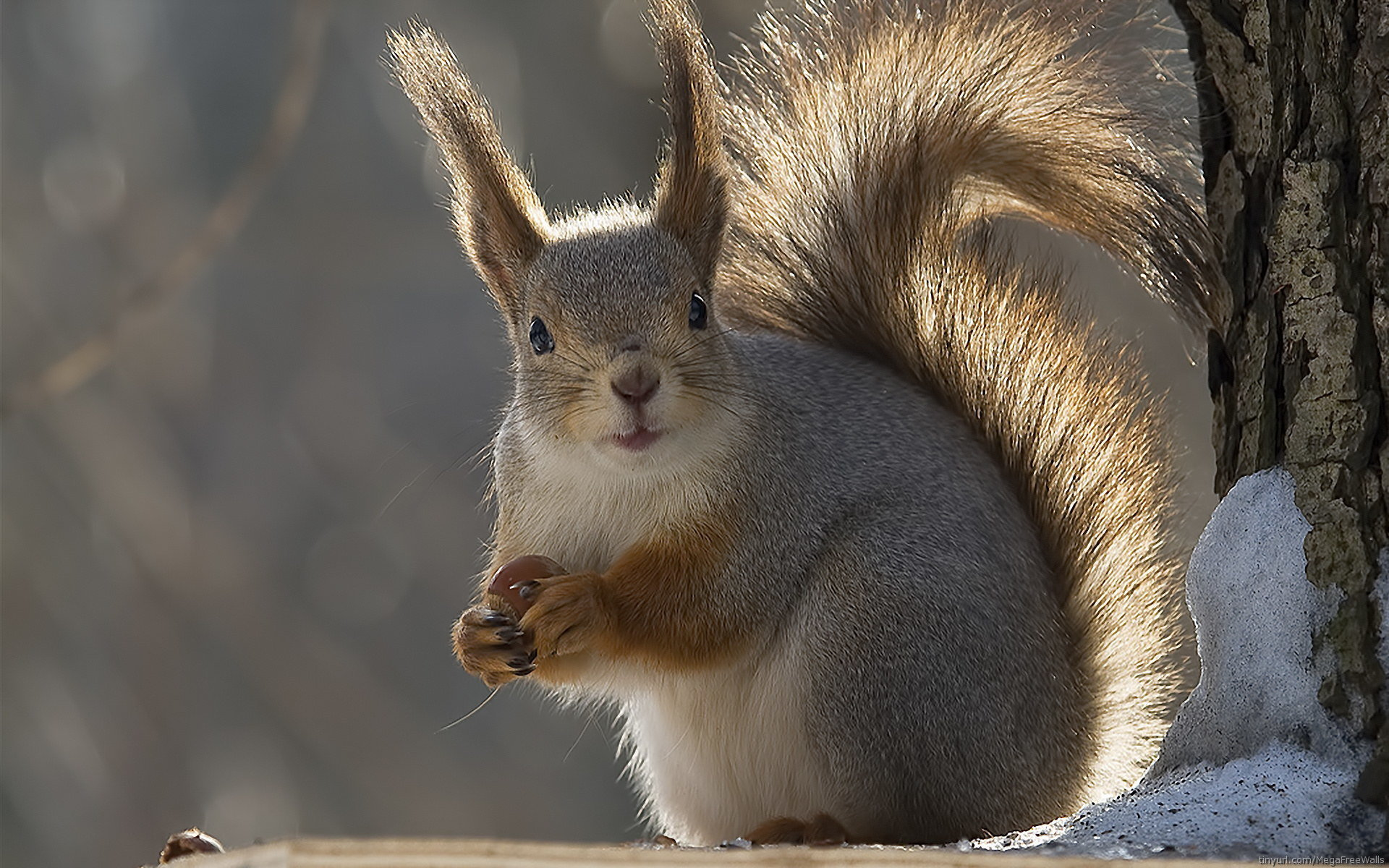 Awesome Squirrel free background ID:311500 for hd 1920x1200 PC