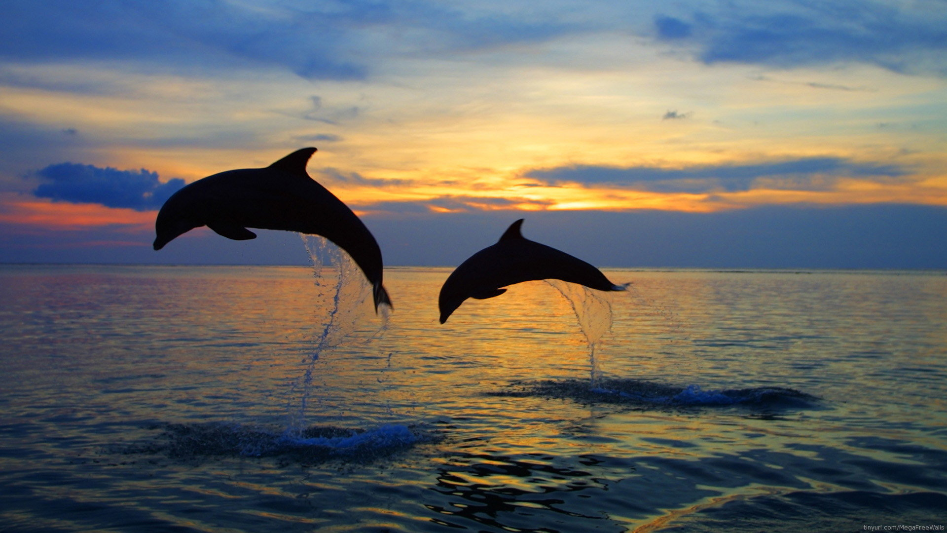 Best Dolphin background ID:248333 for High Resolution full hd desktop