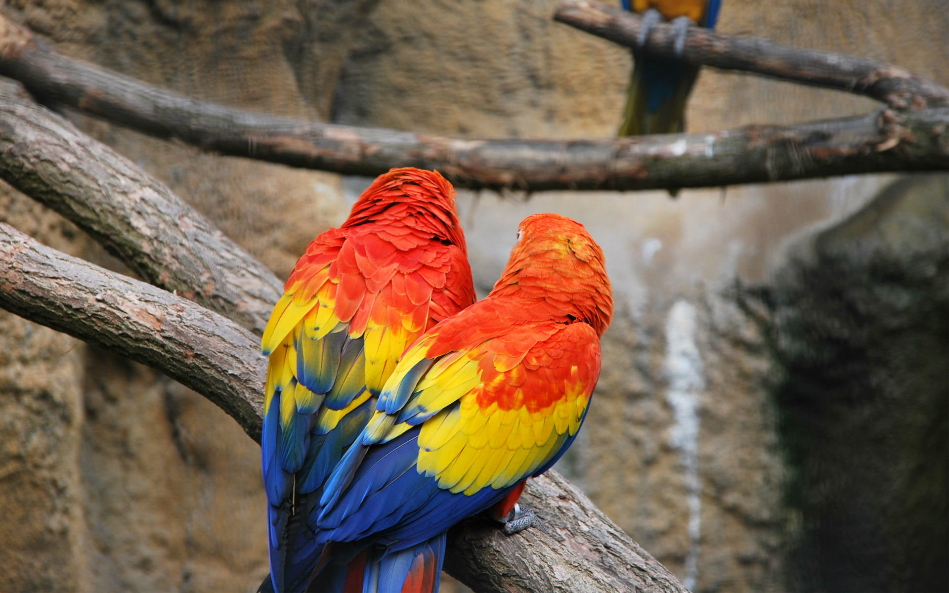 Best Macaw wallpaper ID:46406 for High Resolution hd 1920x1200 computer
