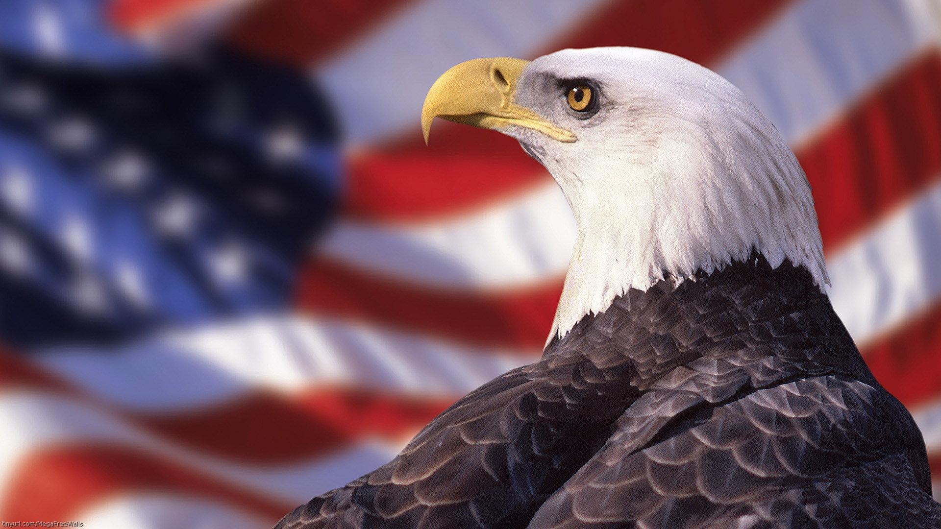 Best American Bald Eagle wallpaper ID:68600 for High Resolution 1080p PC