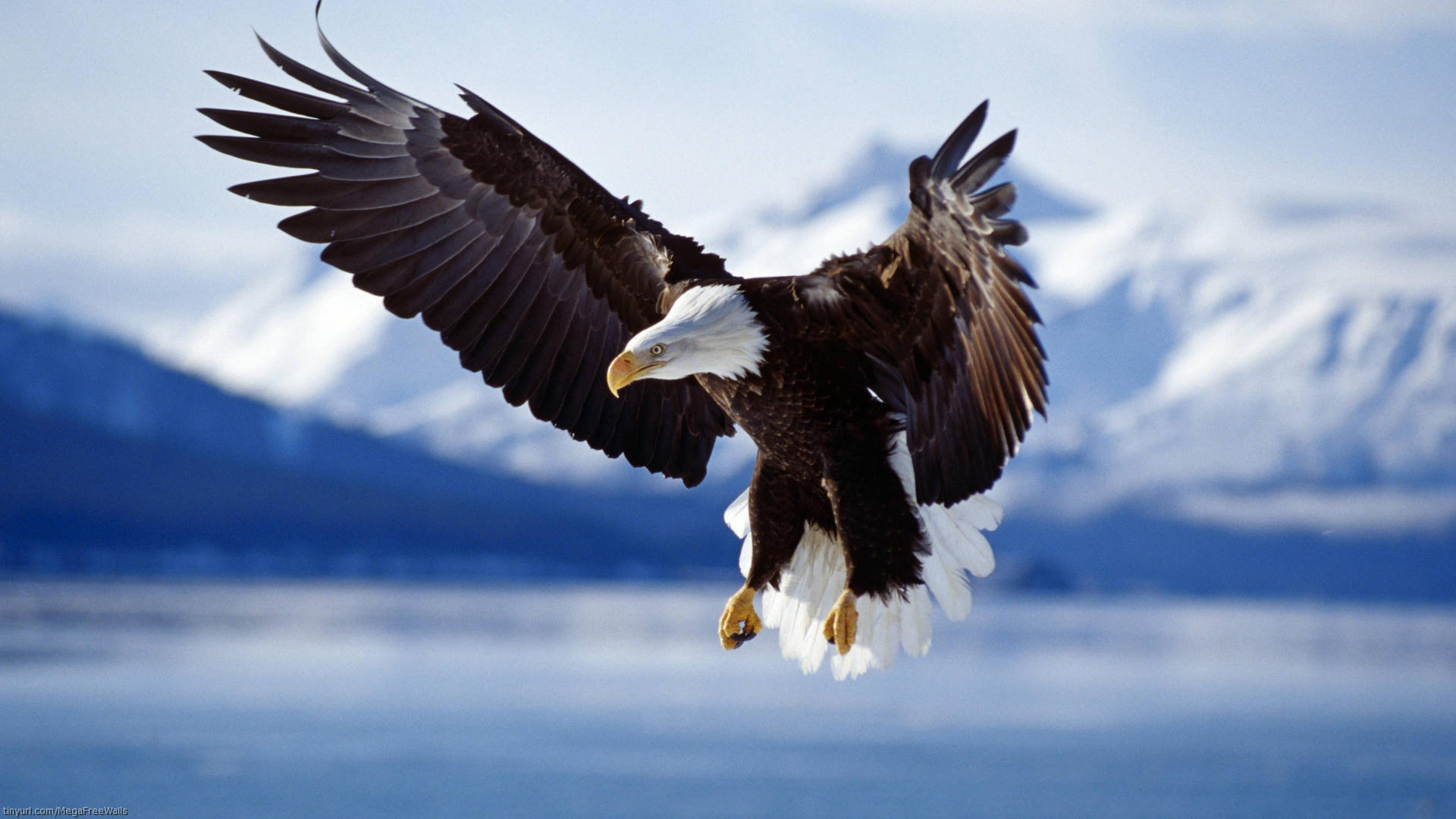 High resolution American Bald Eagle full hd 1920x1080 wallpaper ID:68601 for desktop