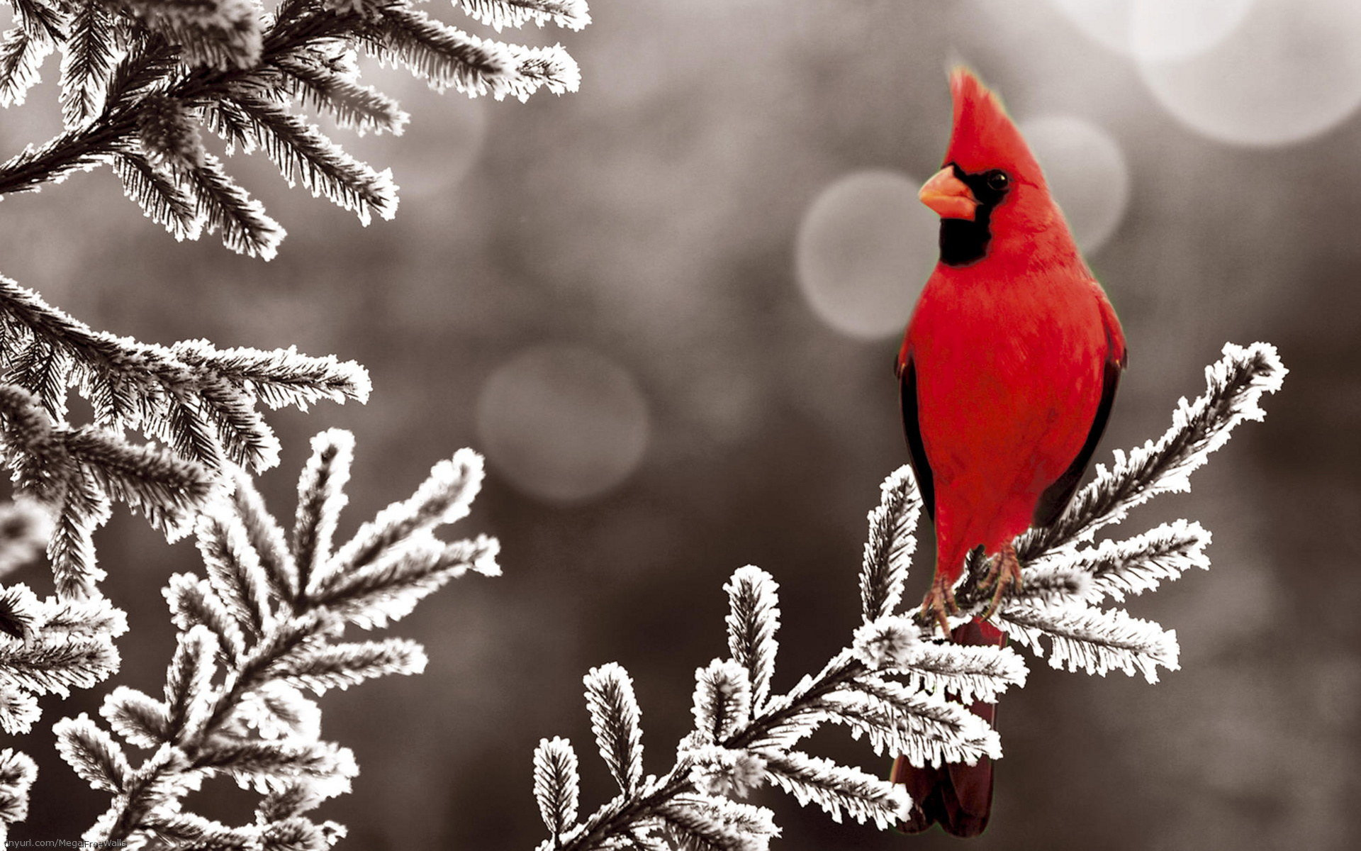 Awesome Cardinal free wallpaper ID:24661 for hd 1920x1200 desktop
