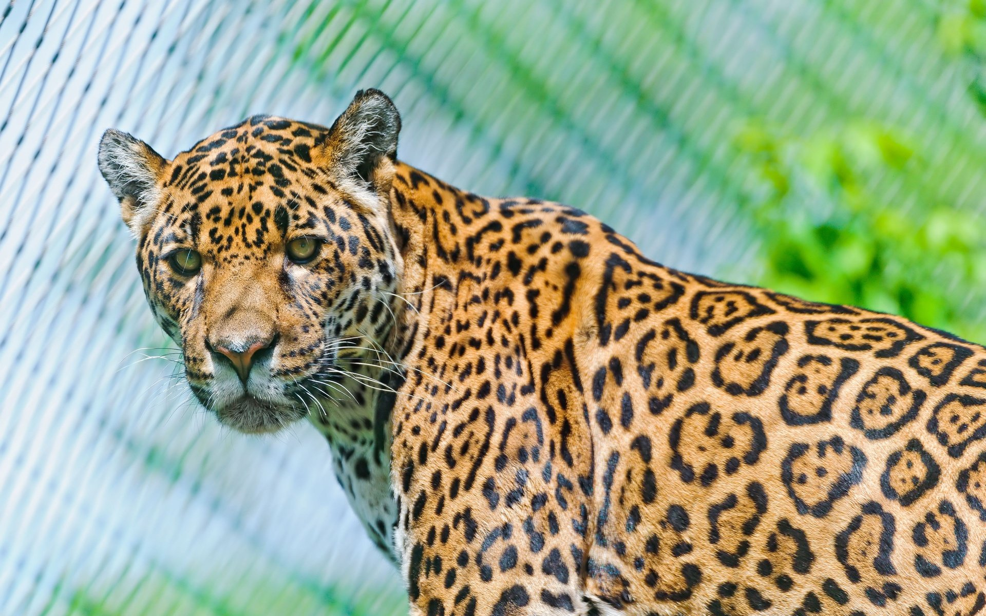 High resolution Jaguar hd 1920x1200 wallpaper ID:30311 for desktop
