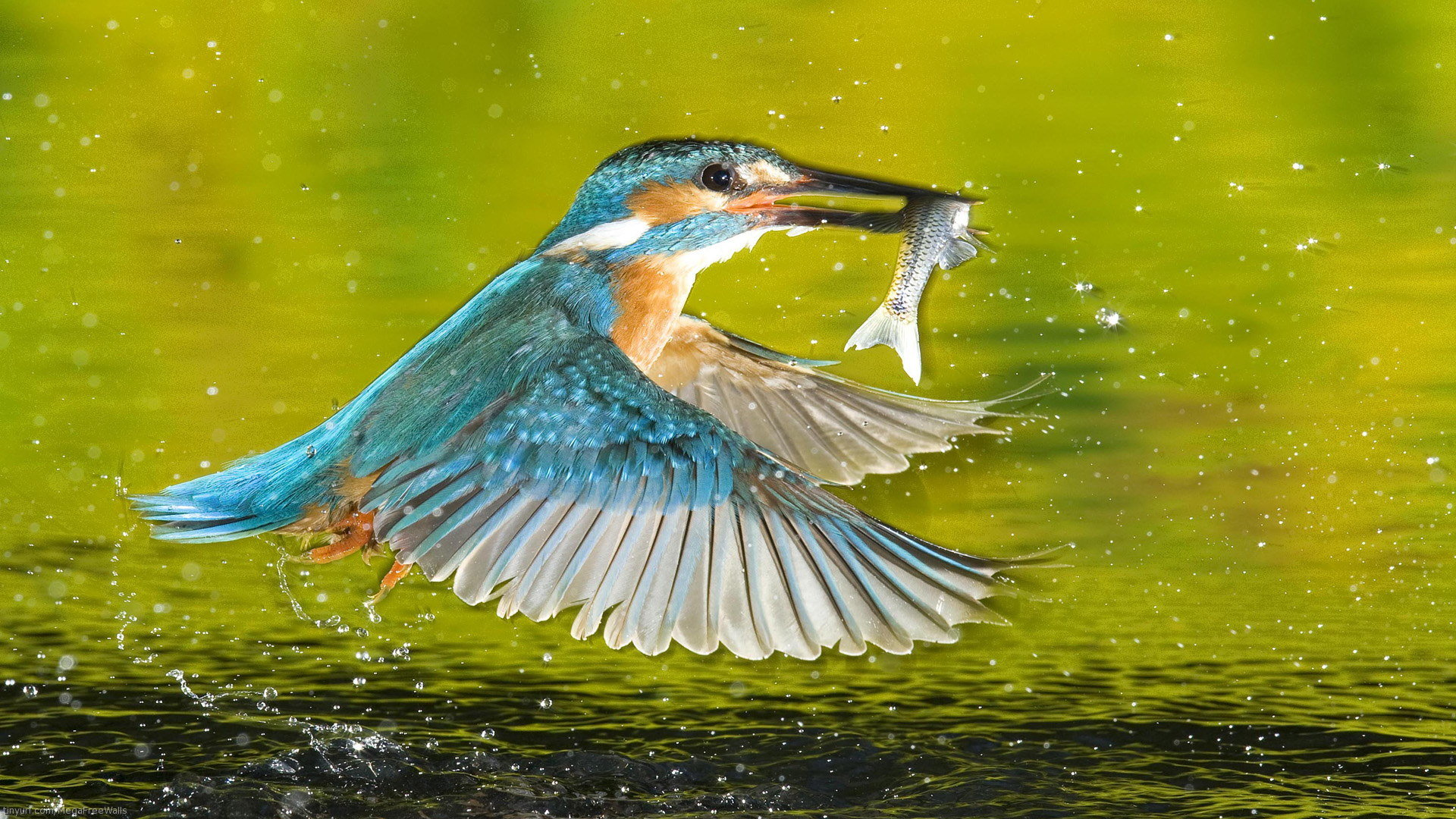 Best Kingfisher wallpaper ID:311310 for High Resolution full hd 1920x1080 computer