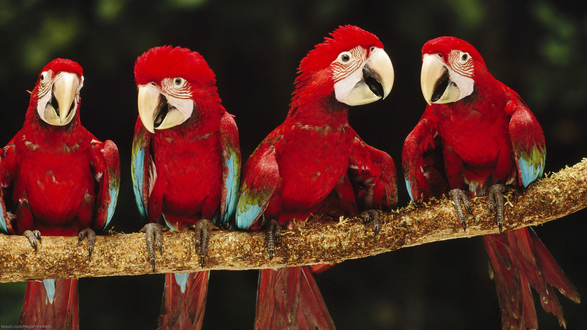 Free Macaw high quality wallpaper ID:46364 for full hd 1920x1080 PC