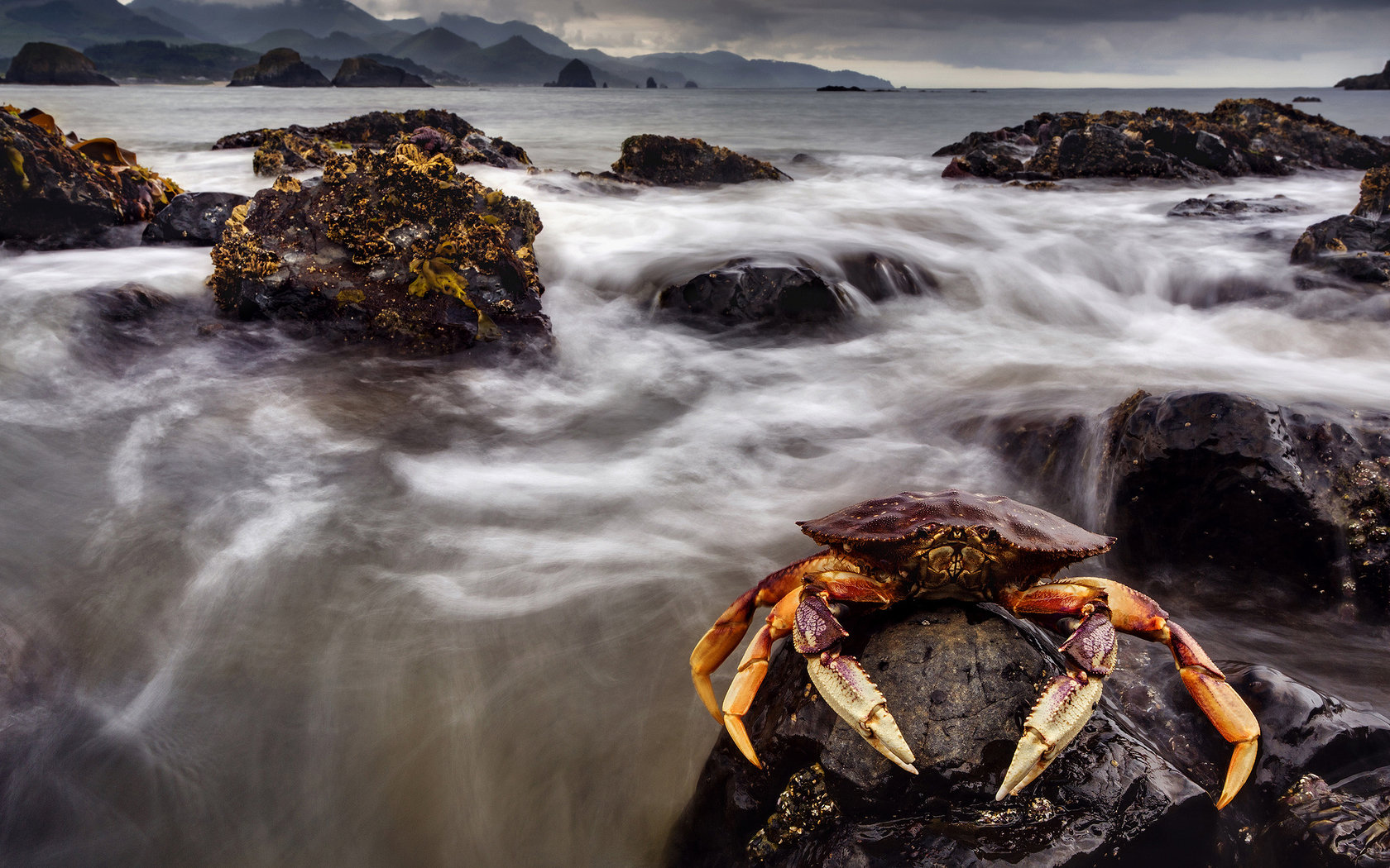 Best Crab background ID:294310 for High Resolution hd 1680x1050 desktop