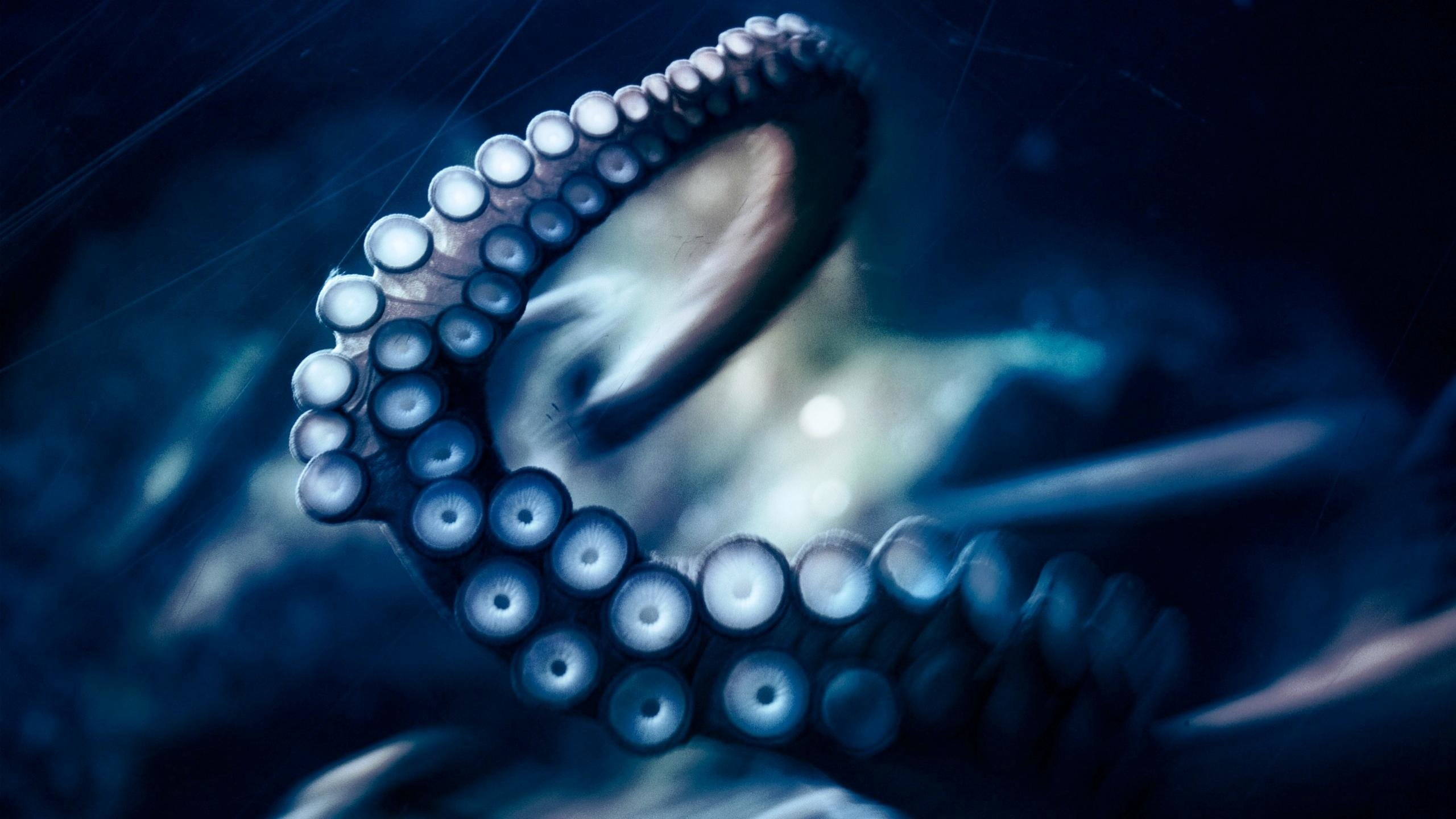 Free Octopus high quality wallpaper ID:350561 for hd 2560x1440 desktop