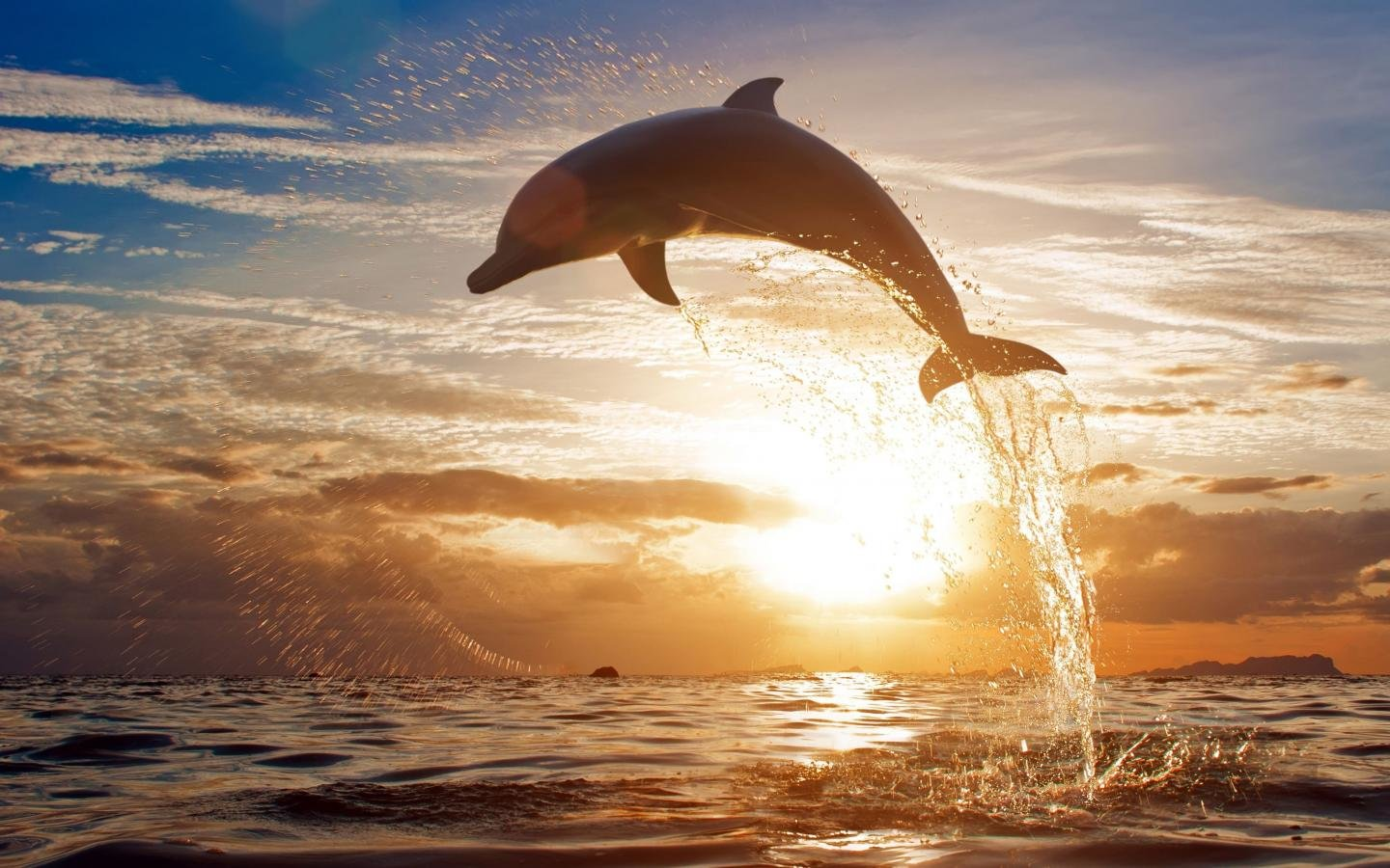 Awesome Dolphin free wallpaper ID:248298 for hd 1440x900 PC