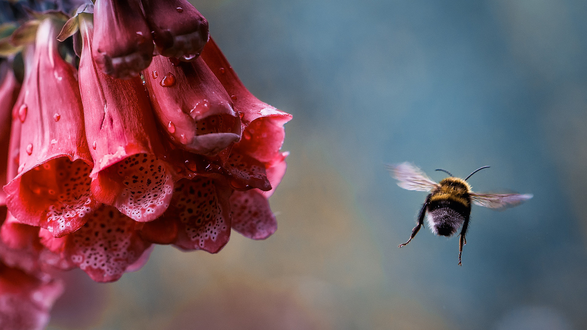 High resolution Bee full hd 1080p wallpaper ID:460822 for desktop