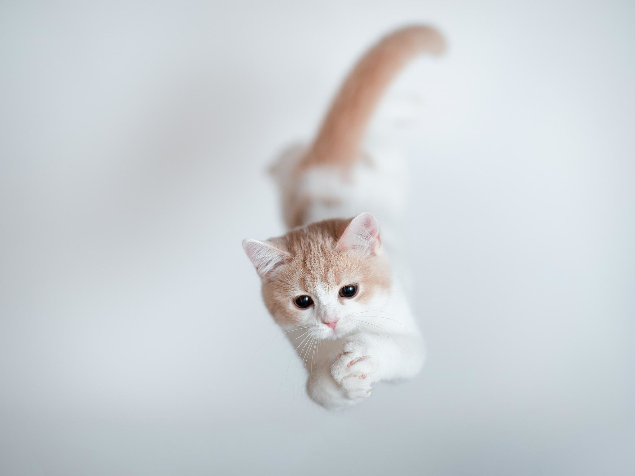 Download hd 2048x1536 Kitten computer background ID:428012 for free