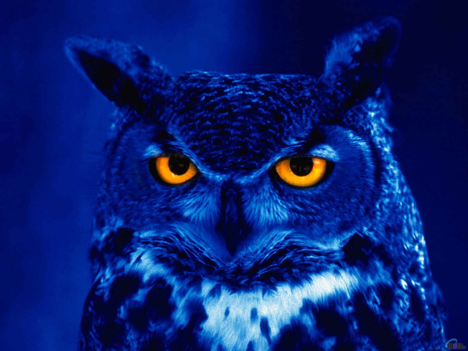 Awesome Great Horned Owl free background ID:297762 for hd 1600x1200 desktop