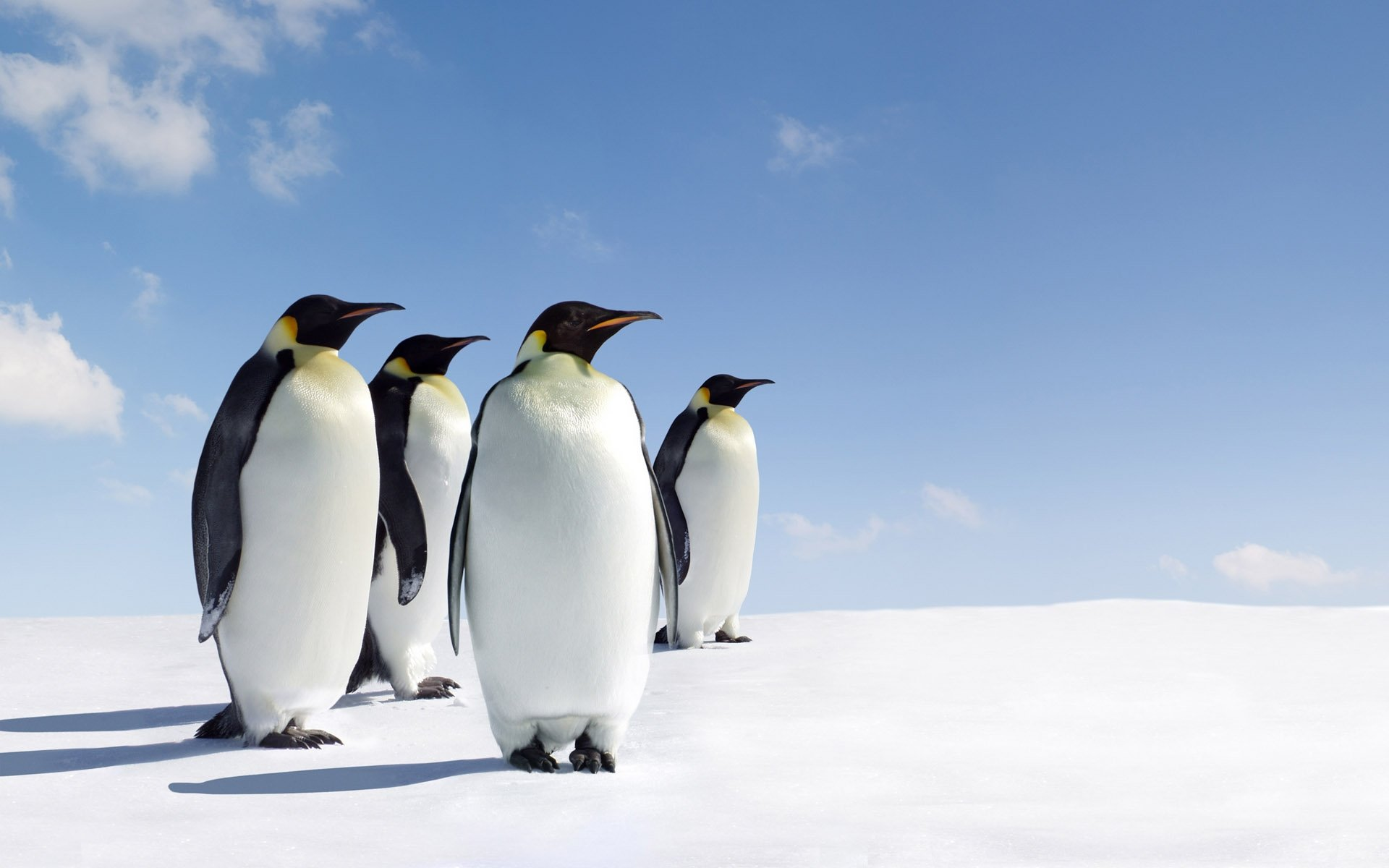Free download Emperor Penguin background ID:47922 hd 1920x1200 for PC