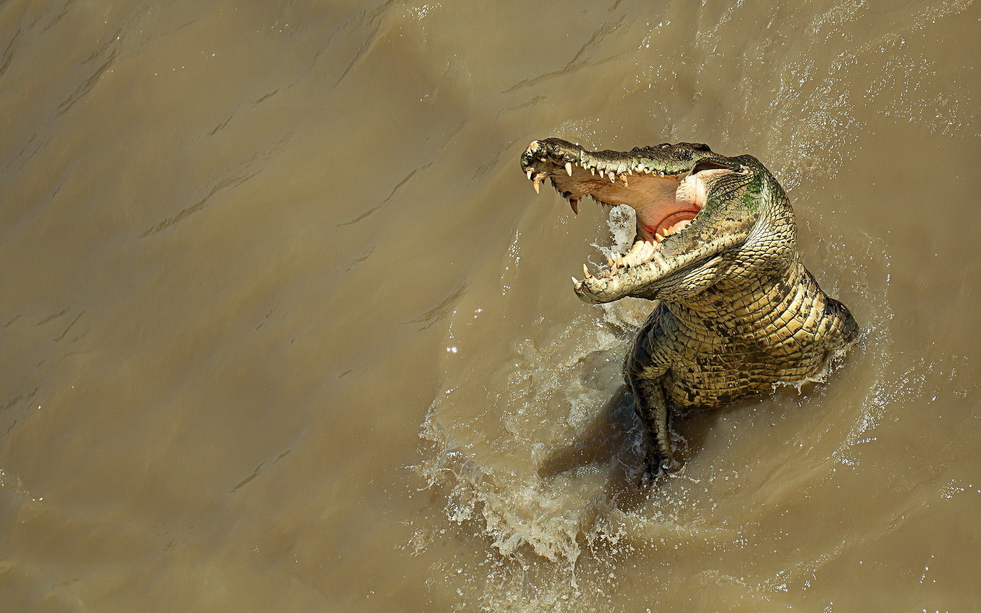 Free Alligator high quality background ID:59651 for hd 1920x1200 desktop