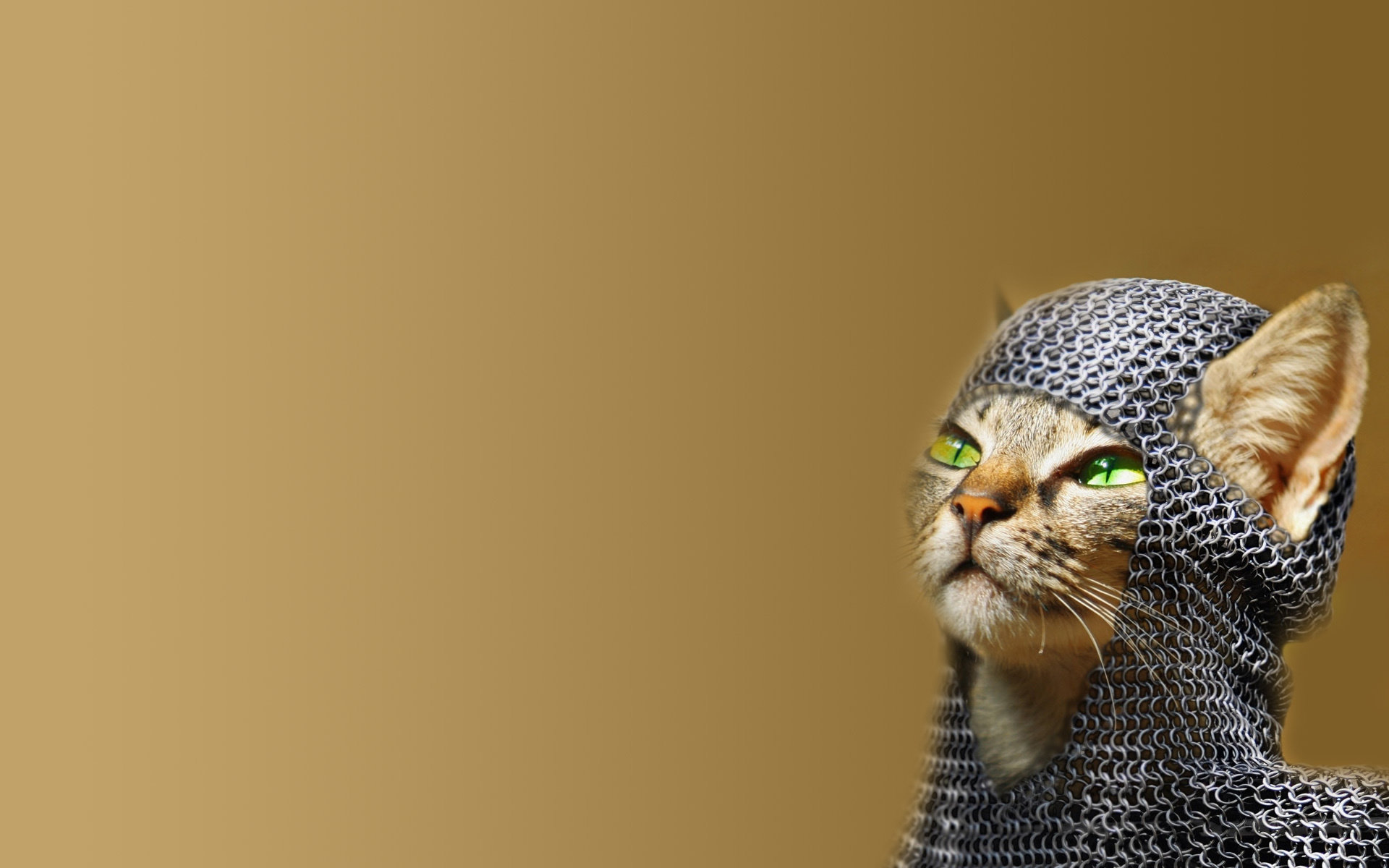 High resolution Funny cat hd 1920x1200 wallpaper ID:373415 for computer