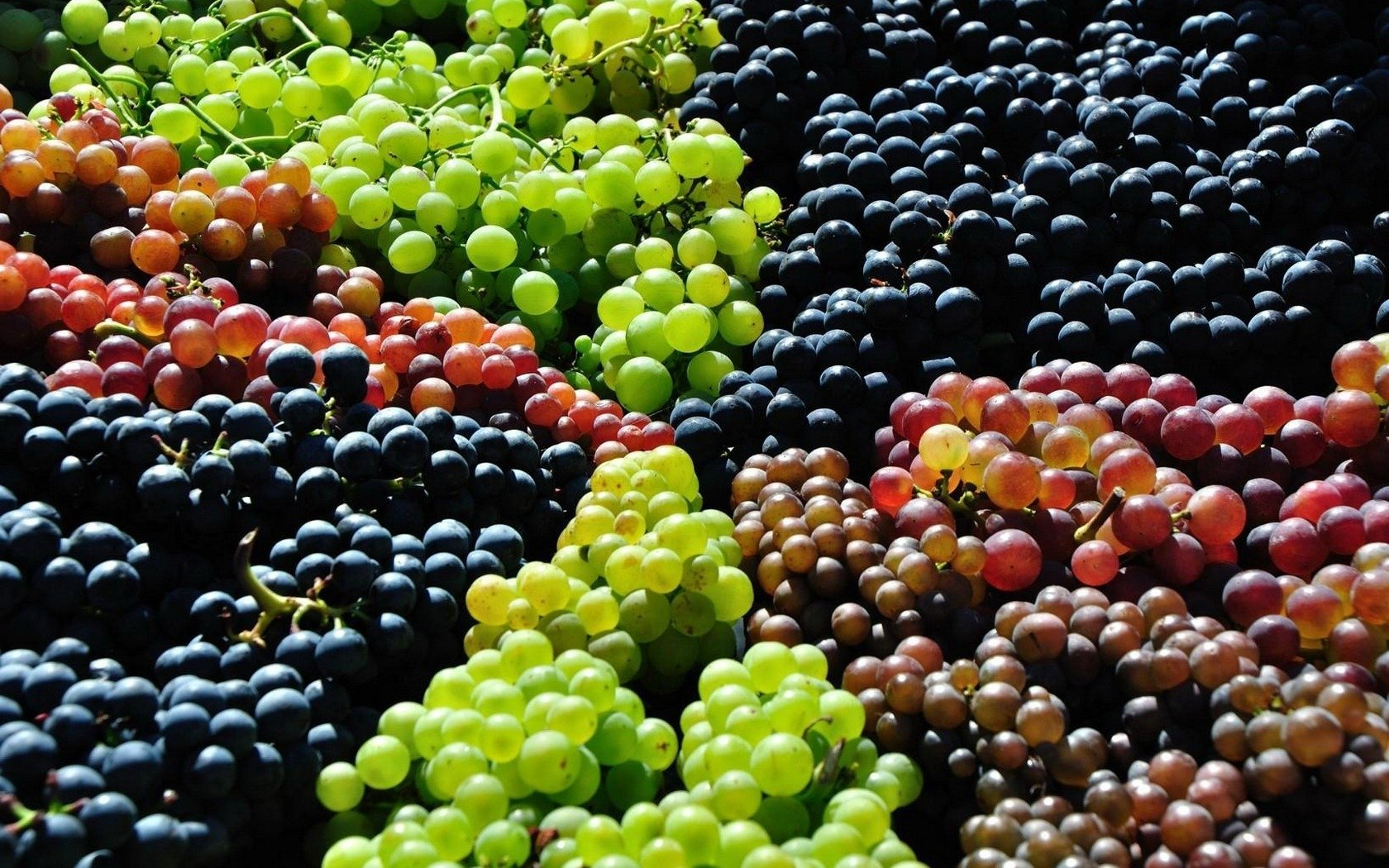 Best Grapes background ID:420769 for High Resolution hd 1680x1050 desktop