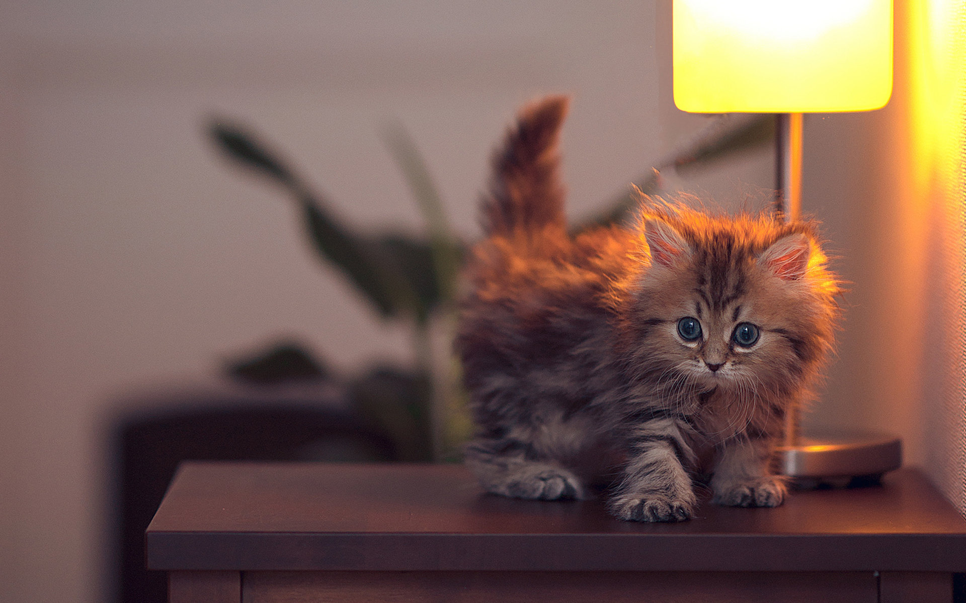 Free download Kitten background ID:429470 hd 1920x1200 for desktop