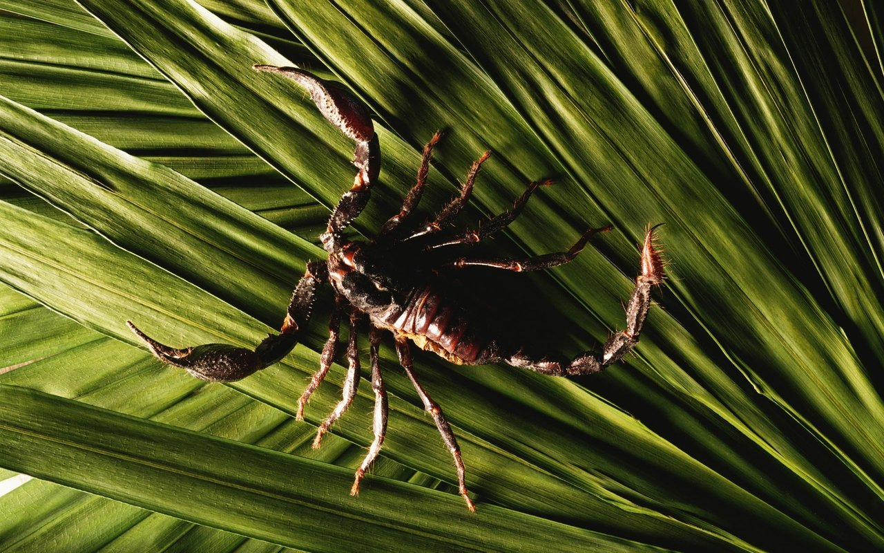 Free download Scorpion background ID:269754 hd 1280x800 for desktop
