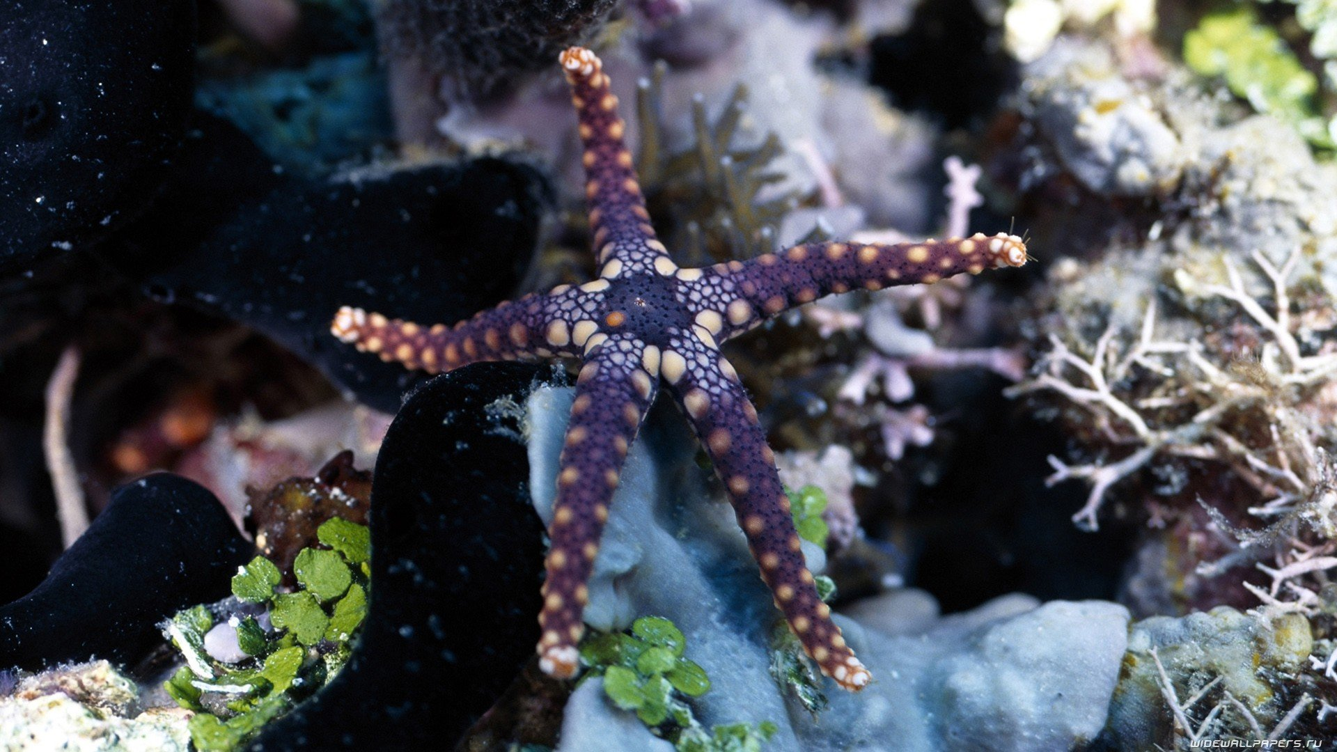 Awesome Starfish free background ID:29700 for 1080p PC
