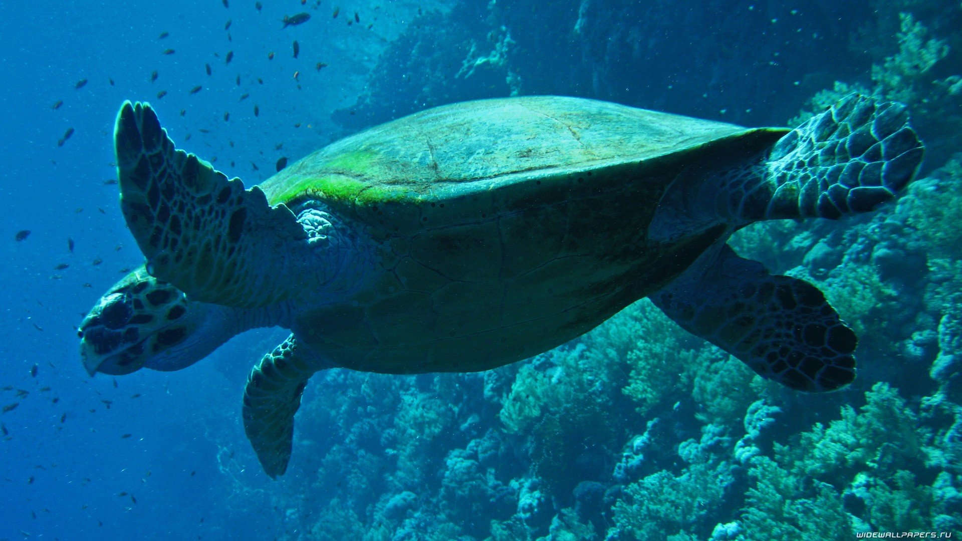 High resolution Turtle 1080p wallpaper ID:29864 for PC