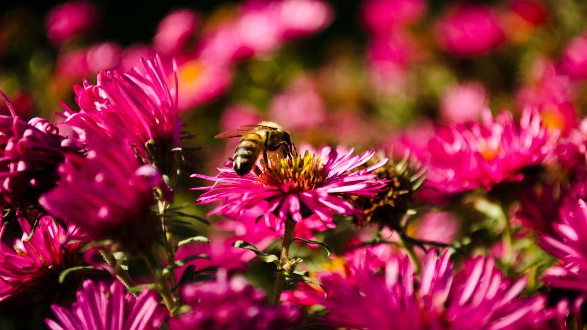 Free Bee high quality background ID:460749 for hd 1080p desktop