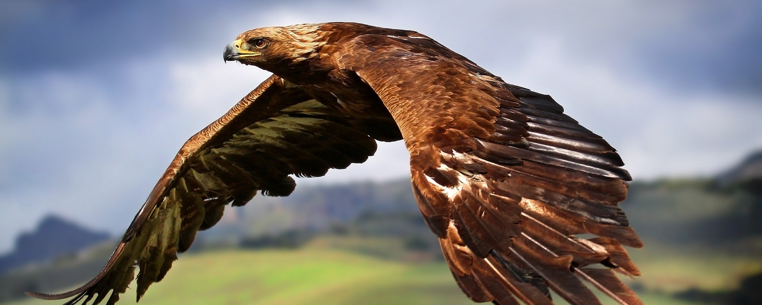 Free Eagle high quality background ID:231230 for dual monitor 2569x1024 computer