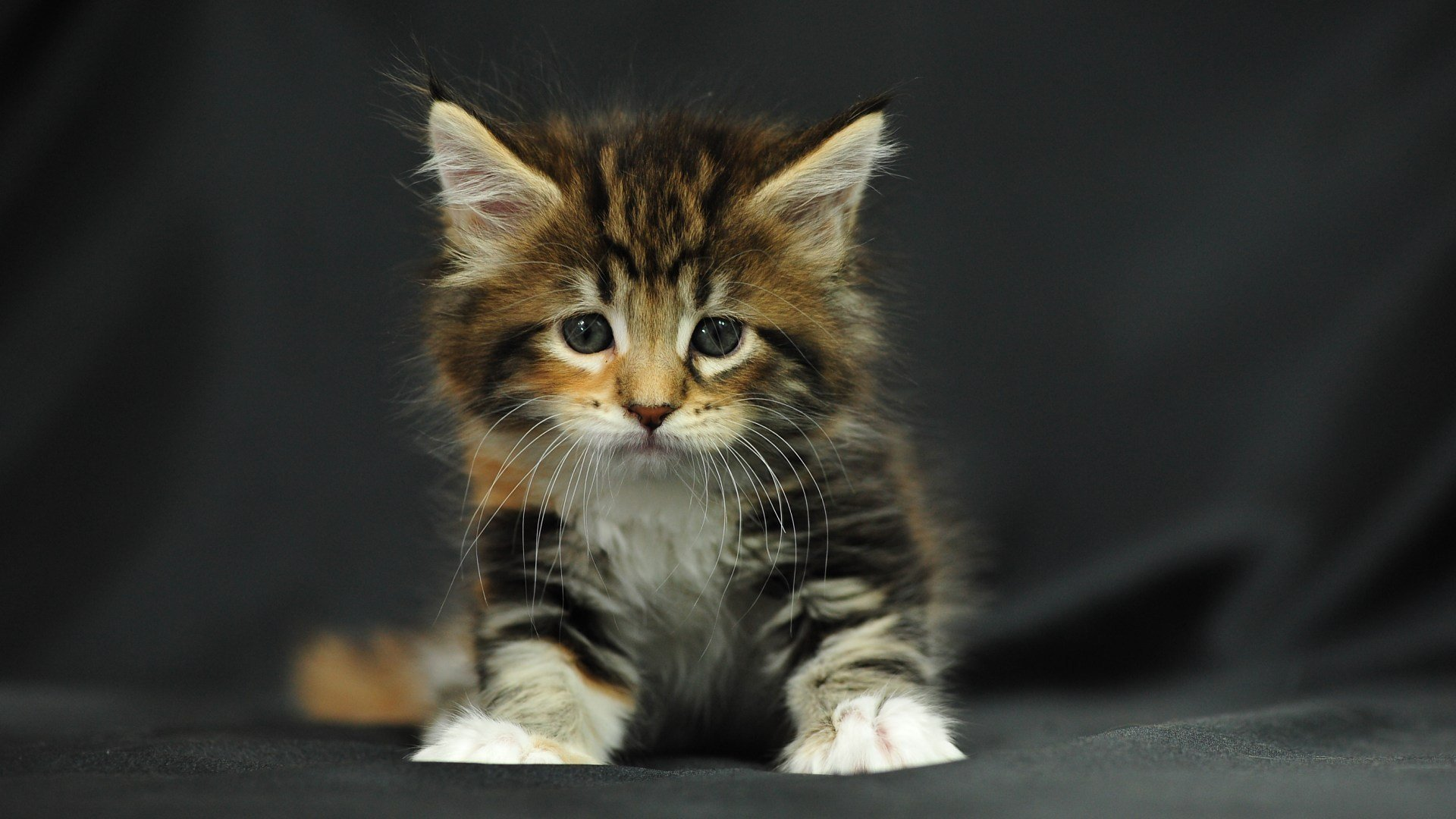 Download full hd 1080p Kitten PC wallpaper ID:429471 for free