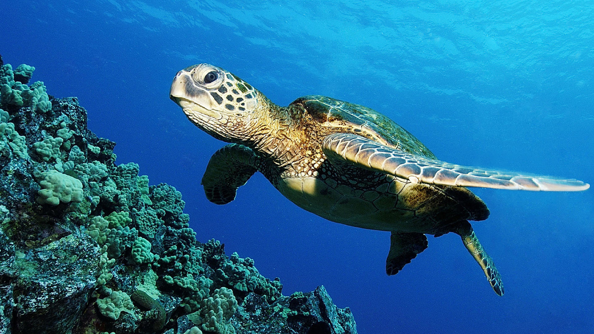 Free Turtle high quality background ID:29798 for full hd 1080p computer