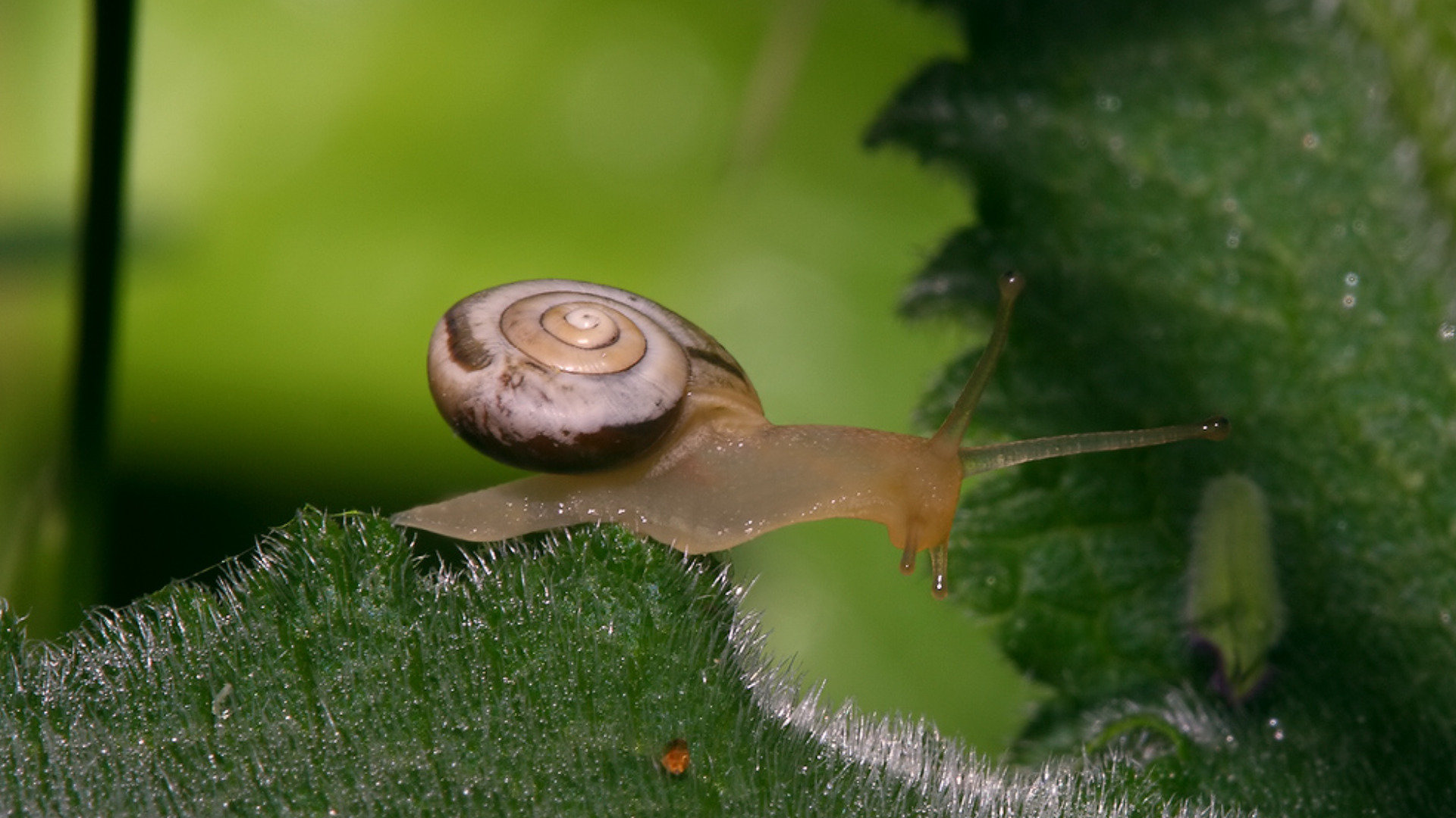 Free download Snail wallpaper ID:198812 full hd for PC