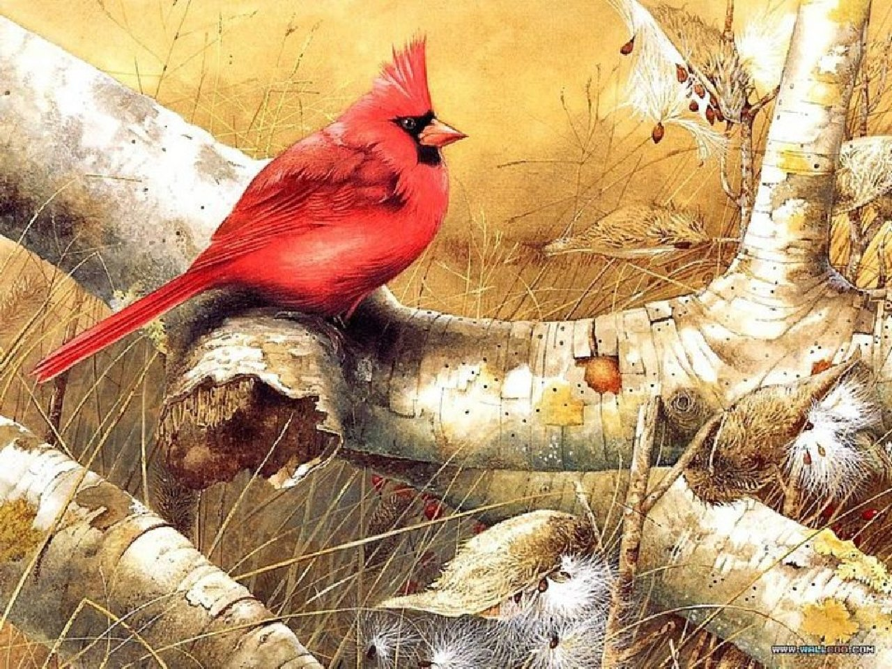 Free download Cardinal background ID:24712 hd 1280x960 for computer