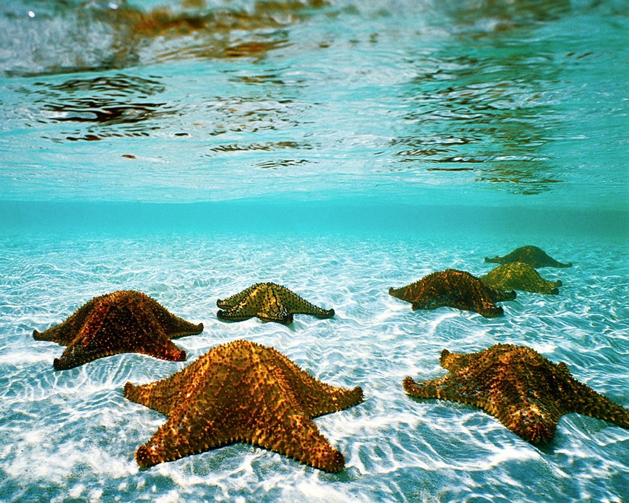 Best Starfish wallpaper ID:29699 for High Resolution hd 1280x1024 PC
