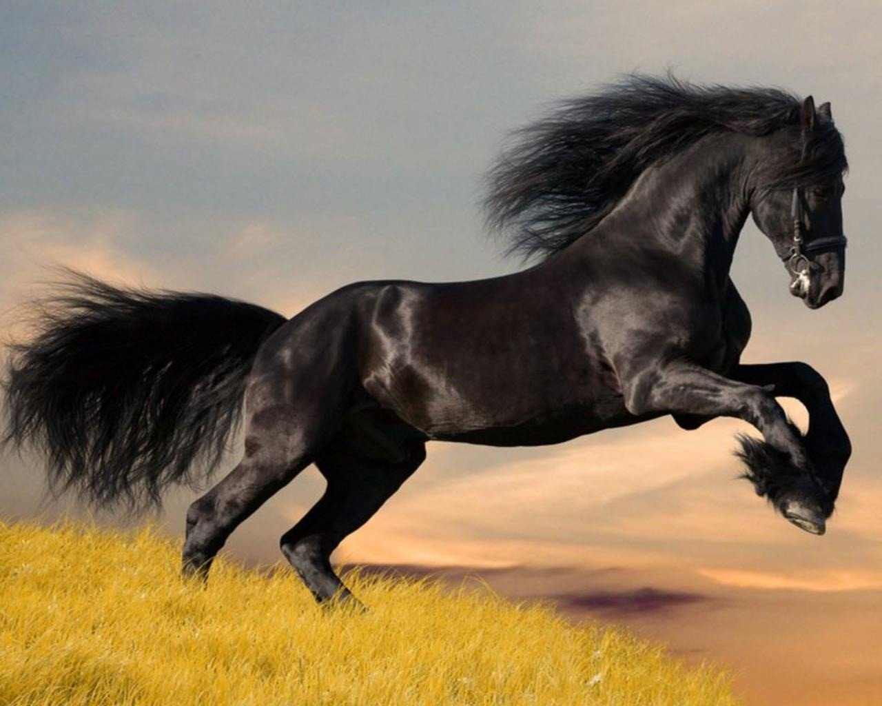 Download hd 1280x1024 Horse computer background ID:23631 for free