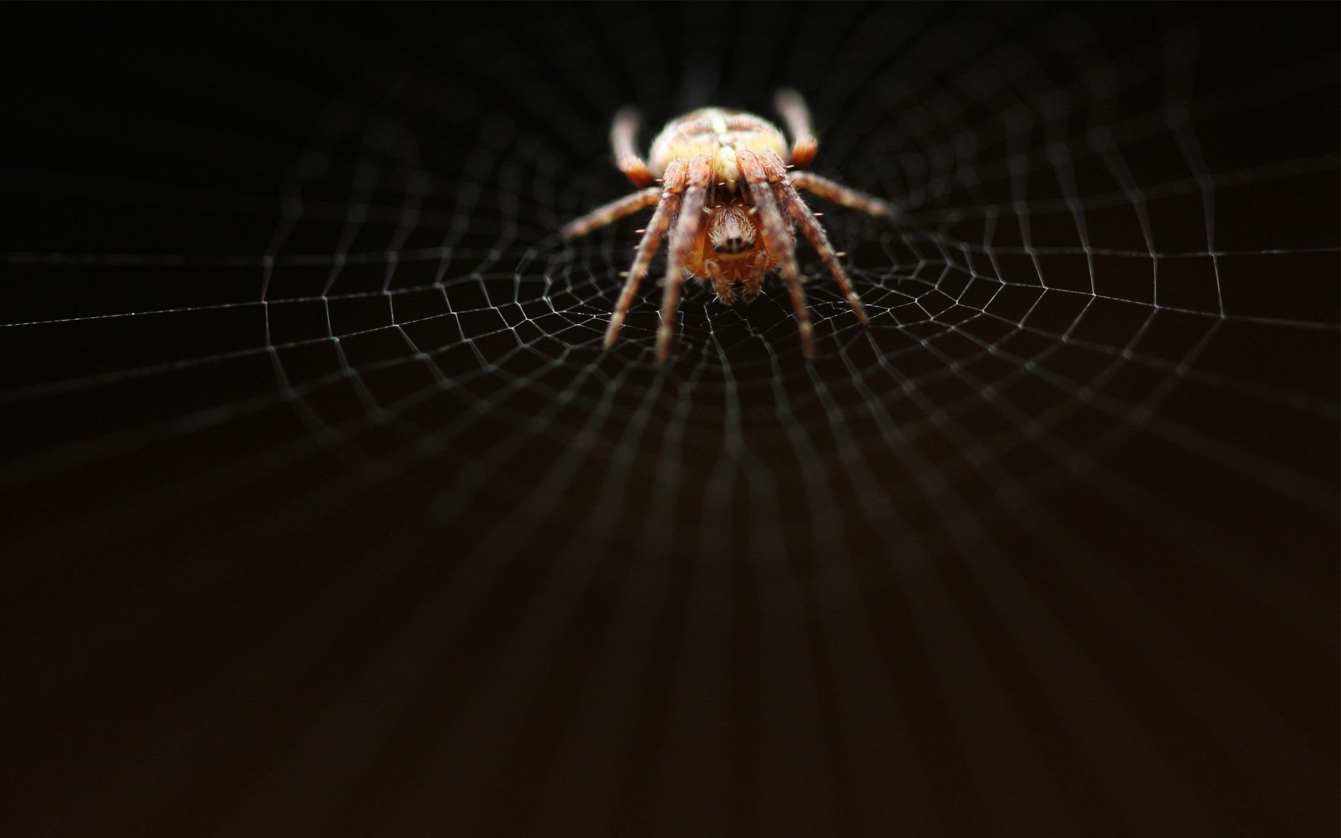 High resolution Spider hd 1920x1200 wallpaper ID:22076 for desktop