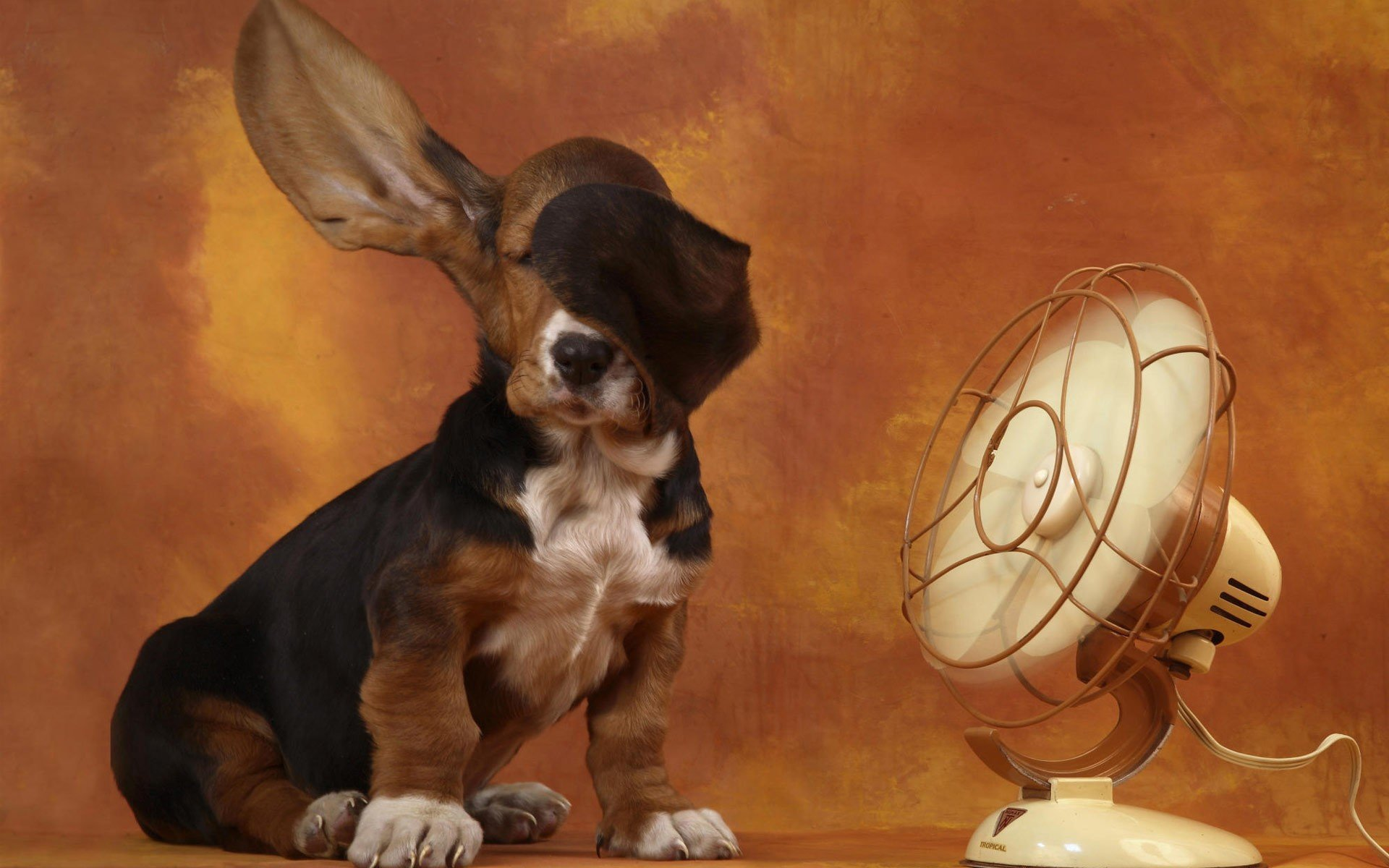 Best Basset Hound background ID:214106 for High Resolution hd 1920x1200 PC