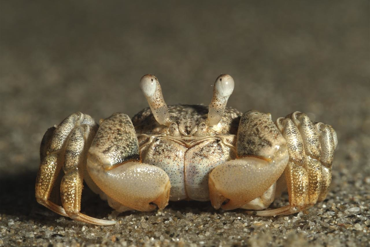 Download hd 1280x854 Crab desktop wallpaper ID:294297 for free