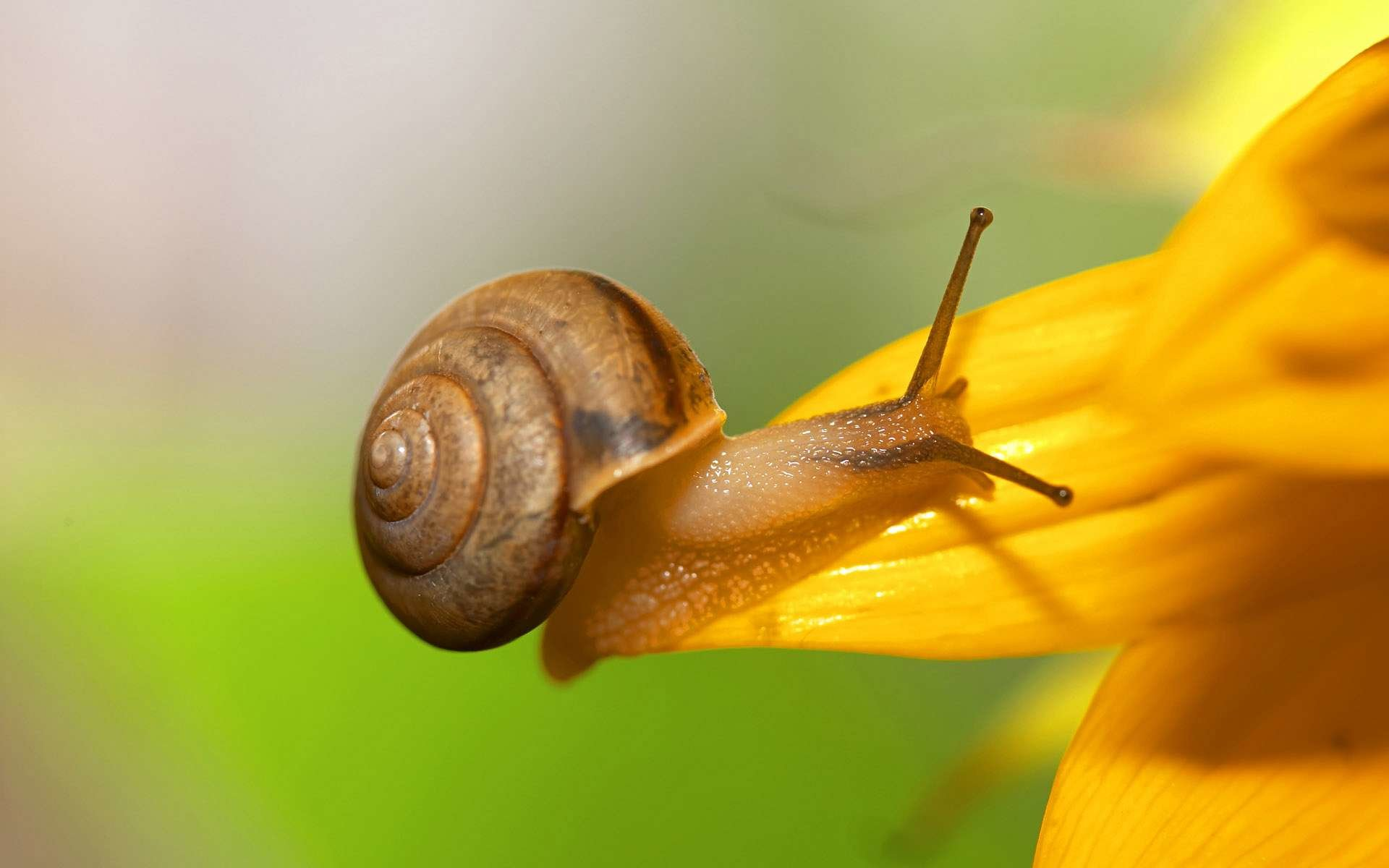 Awesome Snail free background ID:198810 for hd 1920x1200 desktop