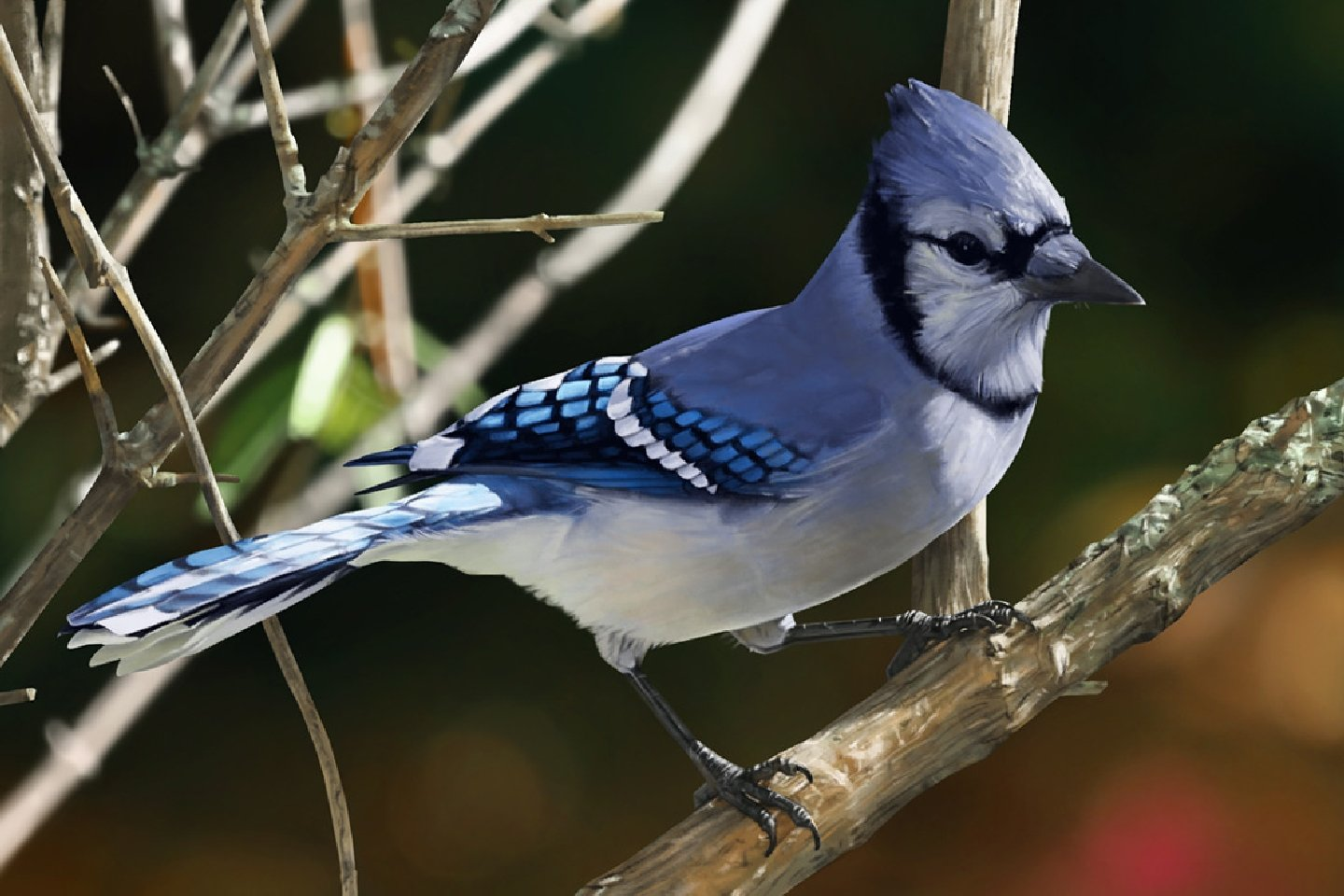 Download hd 1440x960 Blue Jay computer wallpaper ID:158376 for free