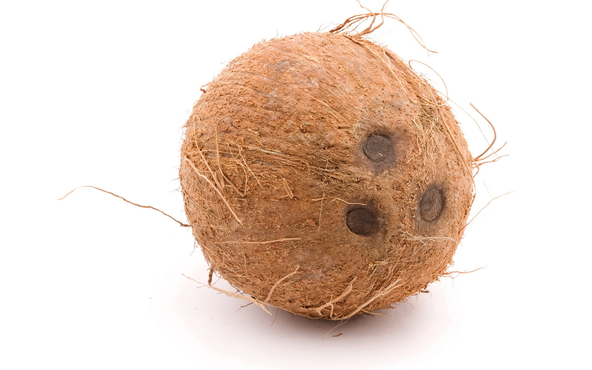 Free Coconut high quality wallpaper ID:402973 for hd 1920x1200 computer