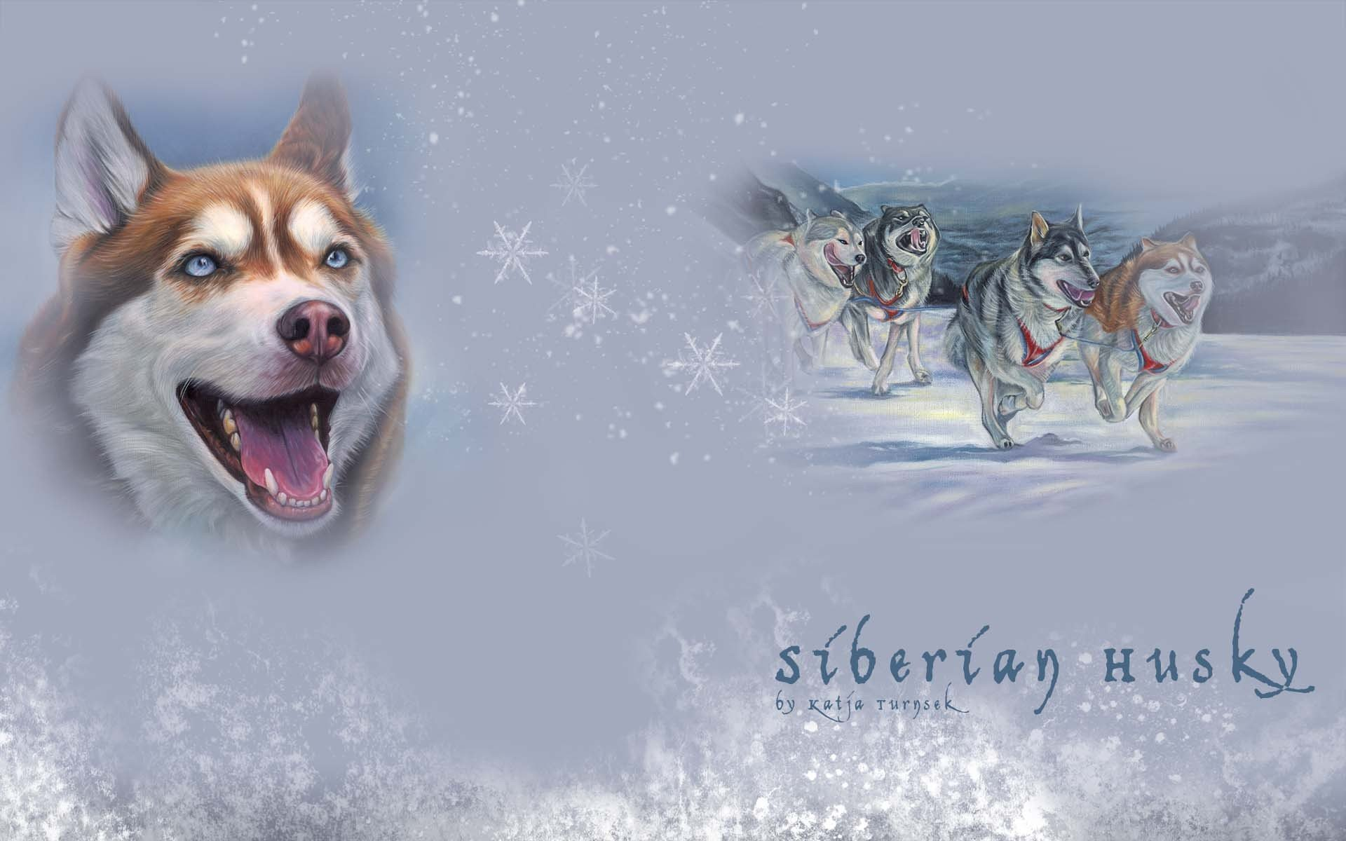 Download hd 1920x1200 Siberian Husky desktop wallpaper ID:155231 for free