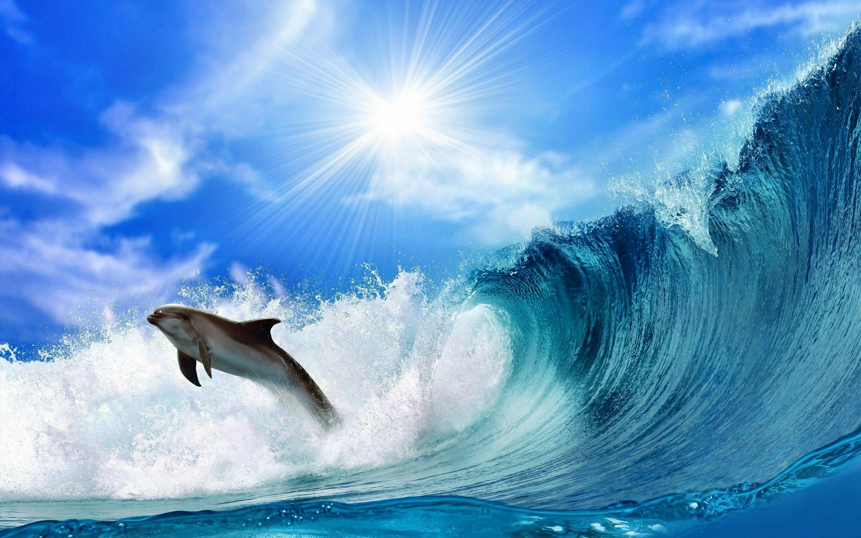 Awesome Dolphin free wallpaper ID:248263 for hd 2880x1800 desktop