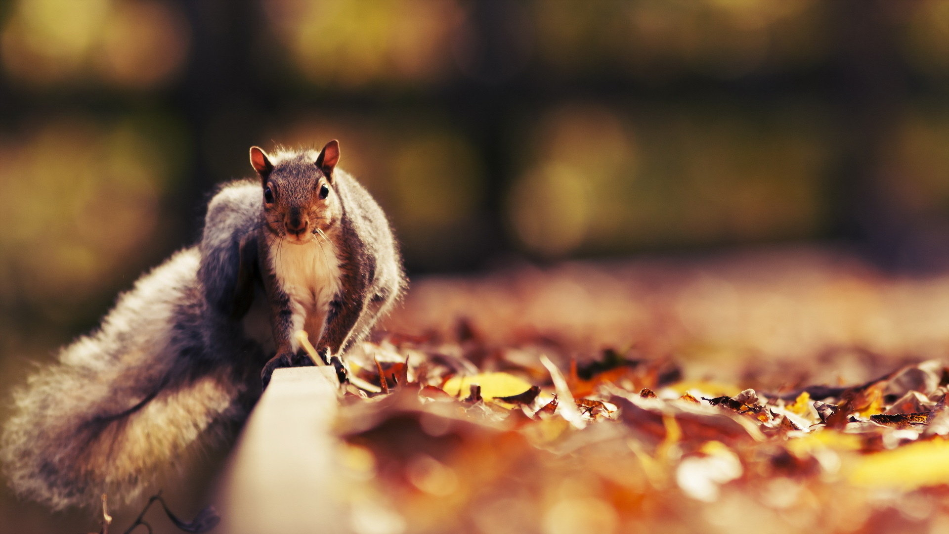 Best Squirrel wallpaper ID:311525 for High Resolution 1080p PC