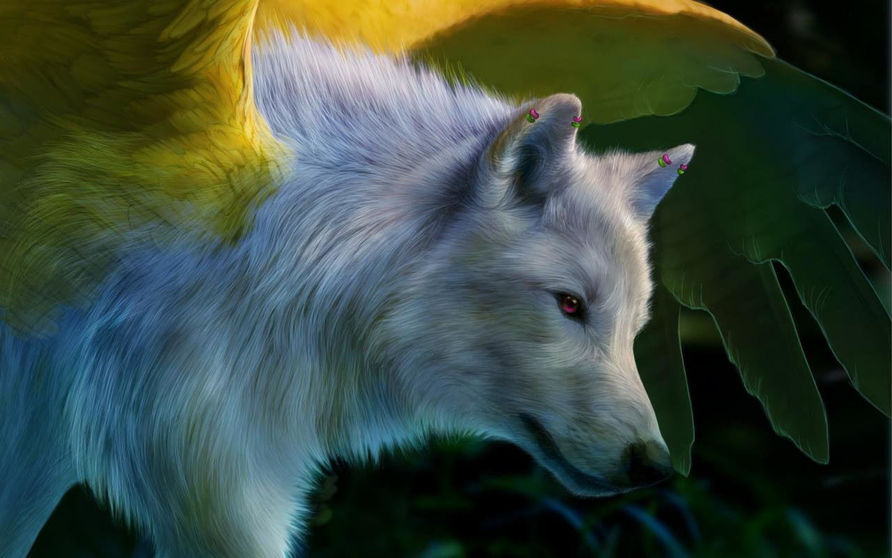 Free Wolf high quality wallpaper ID:117832 for hd 1280x800 desktop