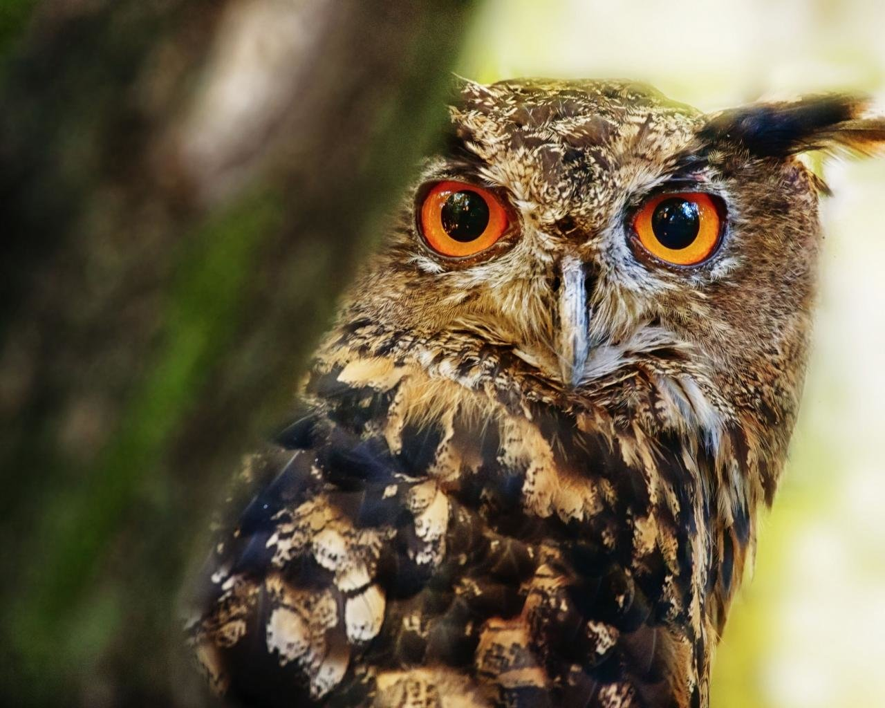 Free Great Horned Owl high quality background ID:297785 for hd 1280x1024 PC