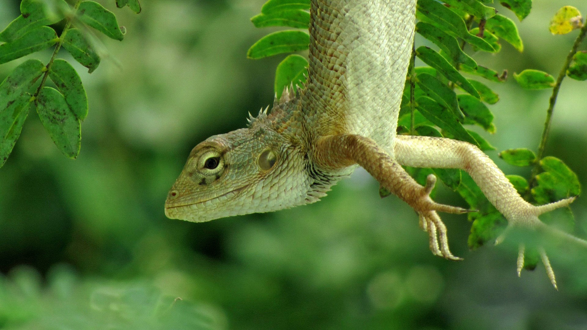 Awesome Lizard free wallpaper ID:444082 for hd 1920x1080 desktop
