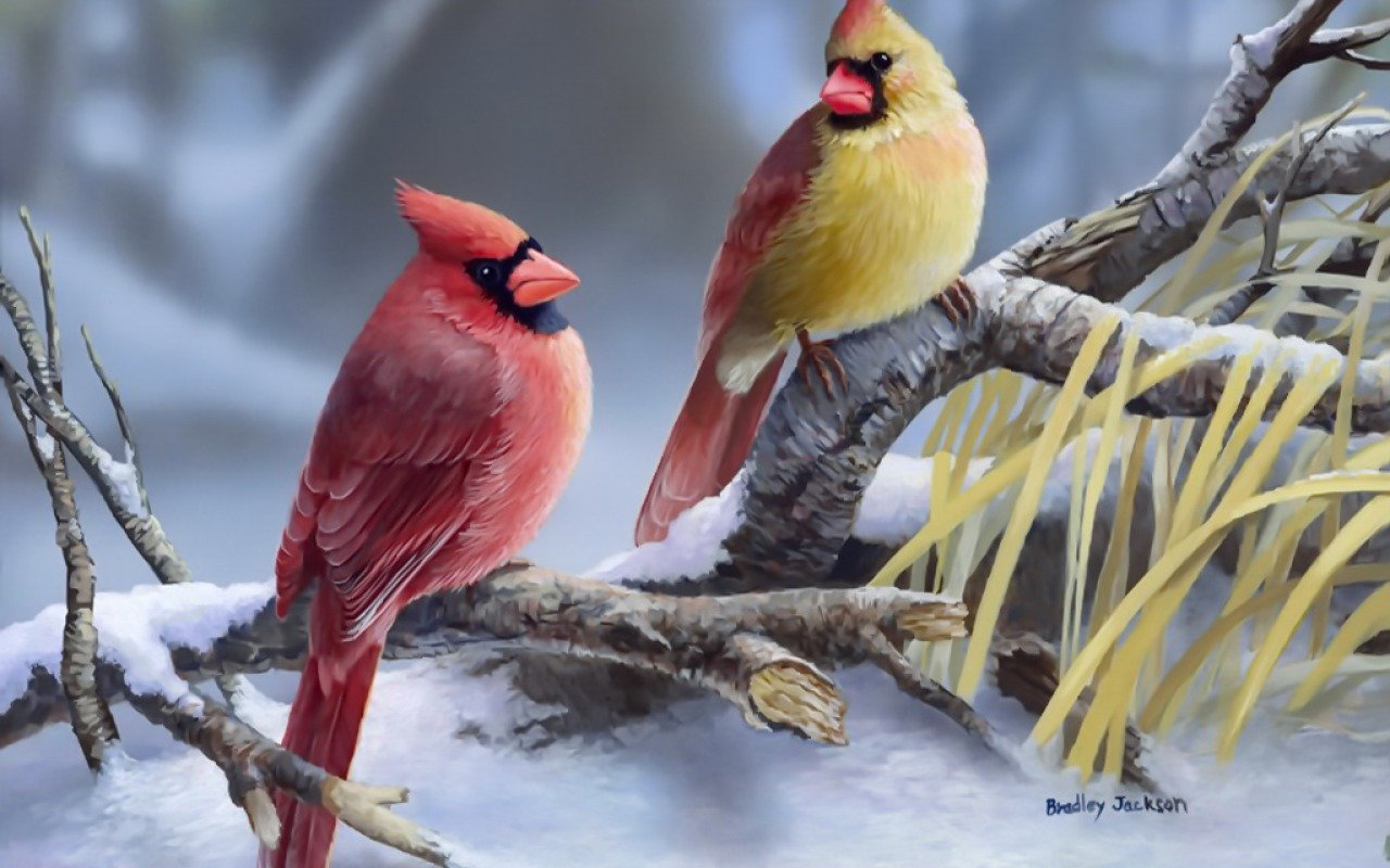 Free Cardinal high quality wallpaper ID:24660 for hd 1280x800 desktop