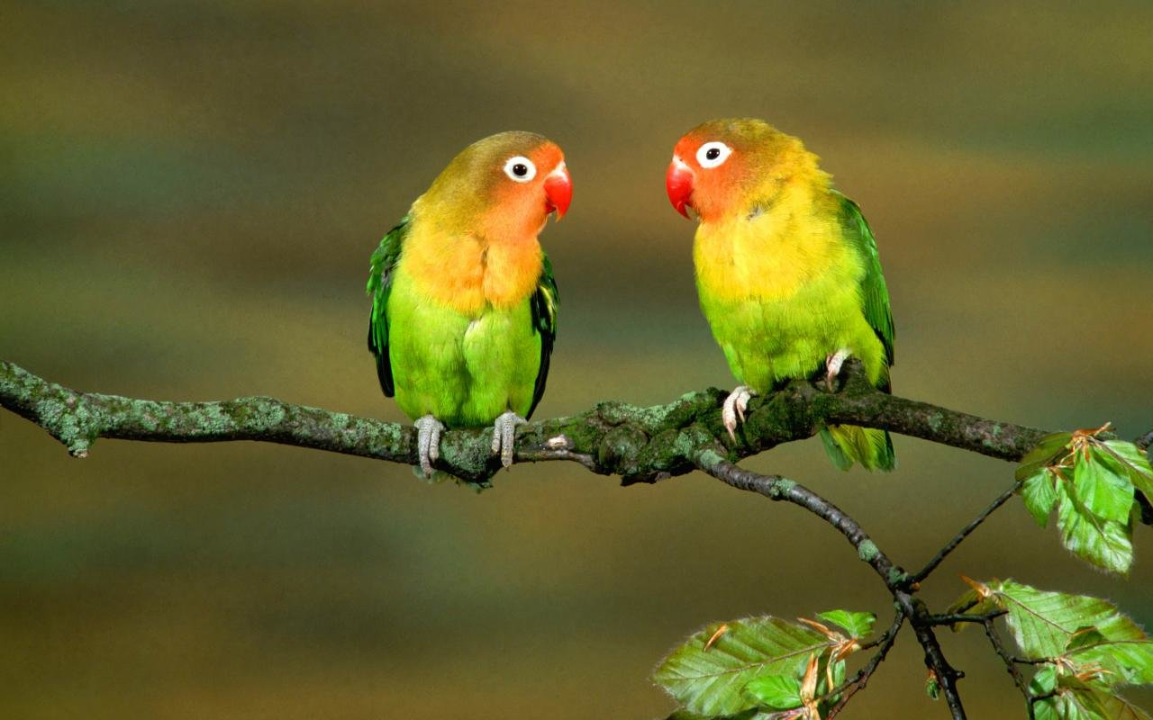 Awesome Parrot free background ID:25786 for hd 1280x800 PC
