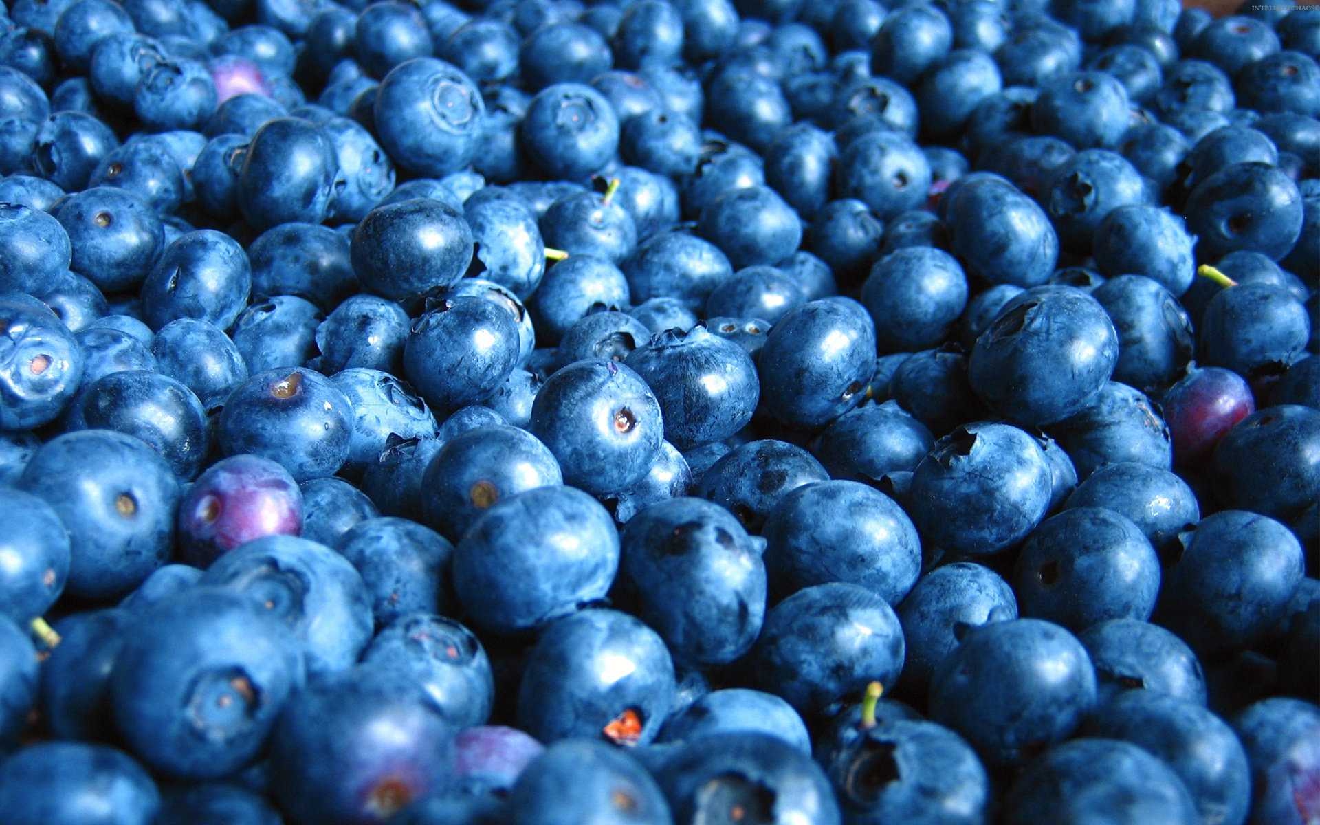 Free Blueberry high quality background ID:68975 for hd 1920x1200 computer