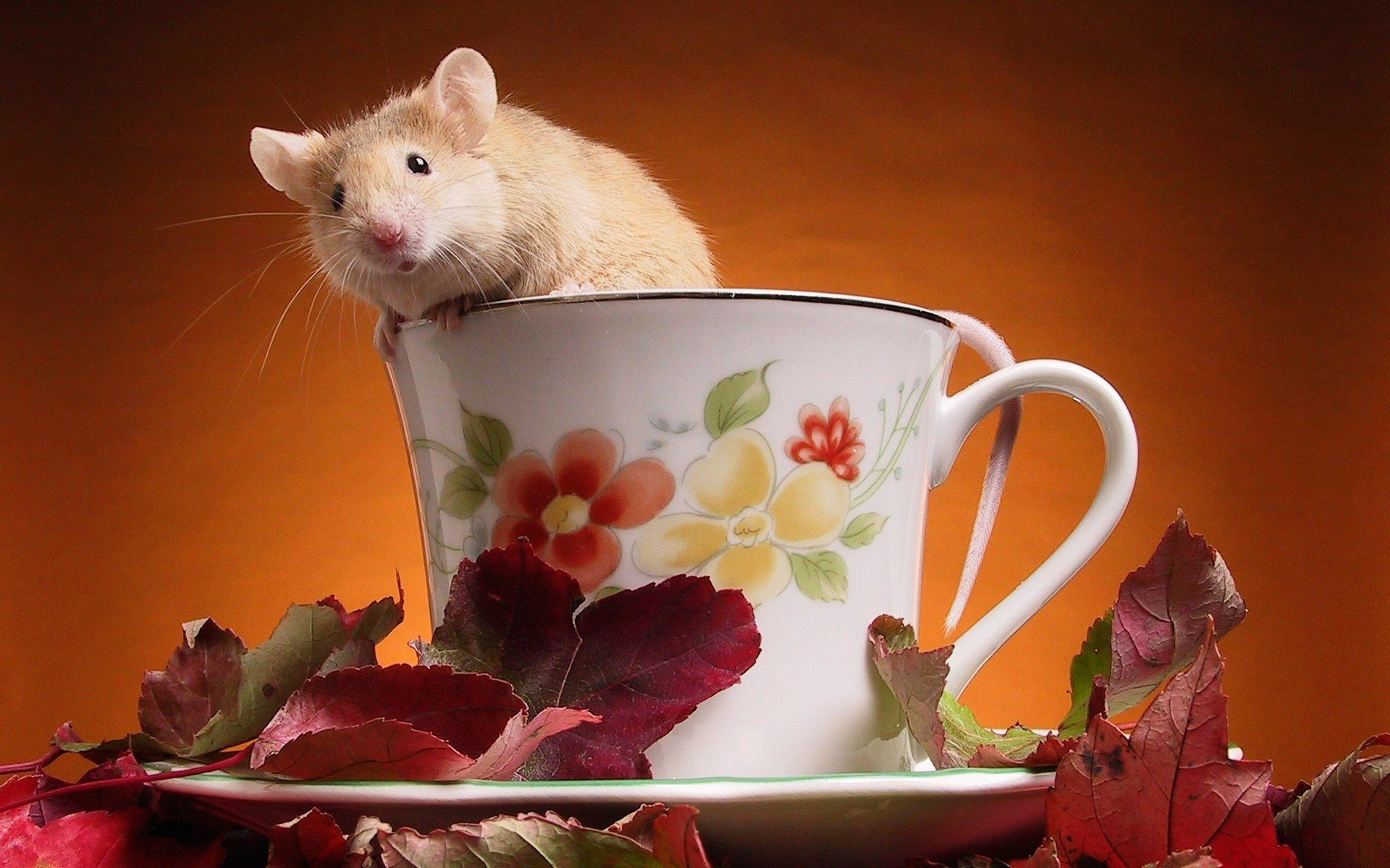 High resolution Hamster hd 1920x1200 background ID:234038 for desktop