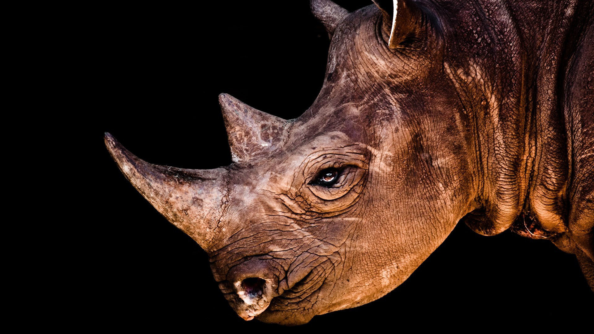 Best Rhino wallpaper ID:20097 for High Resolution full hd 1080p PC